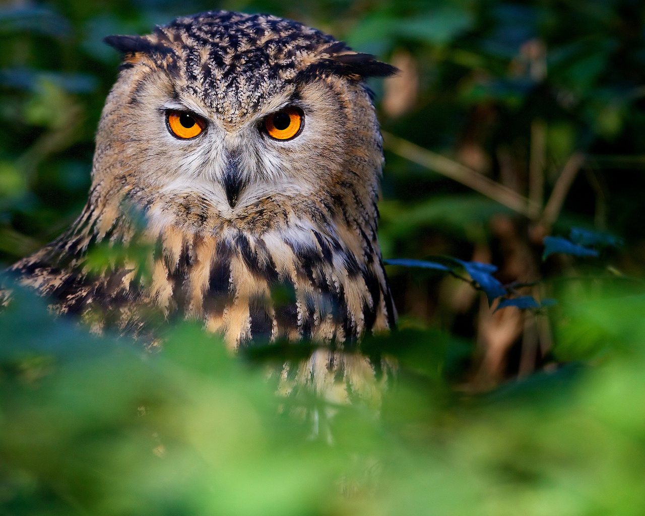 картинка сердитая сова каталоге найдете широкий