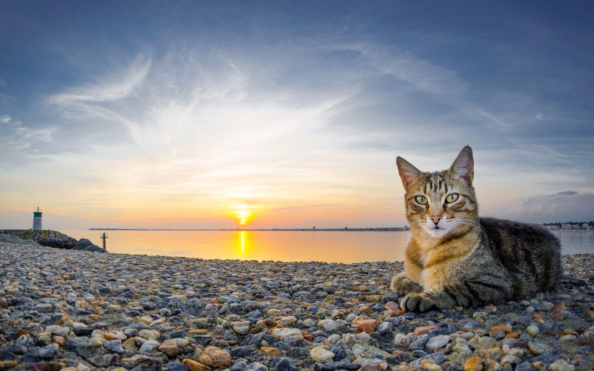 фото для авы солнечная кошка фасон