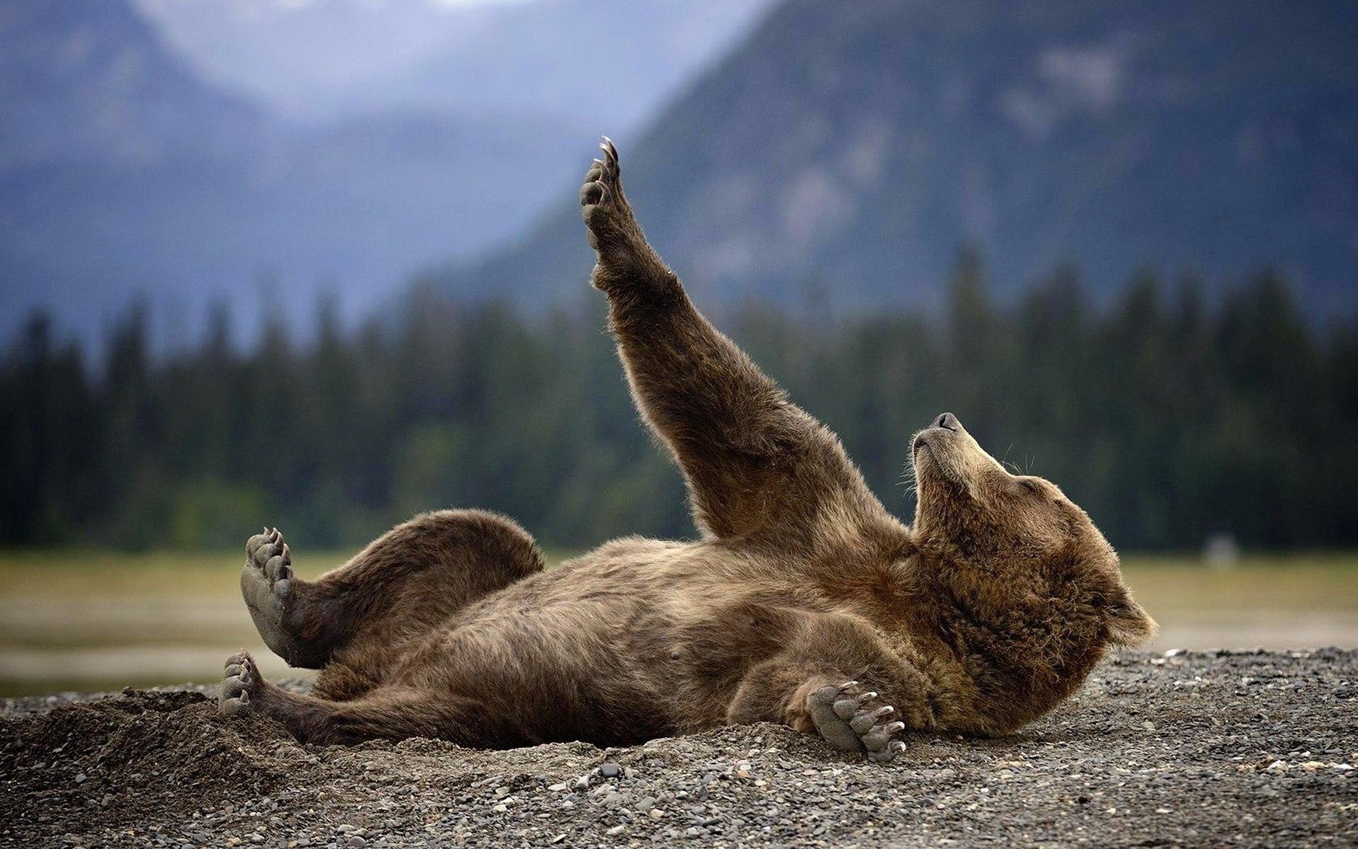 последние картинки медвежата в лесу с добрым утром красивые