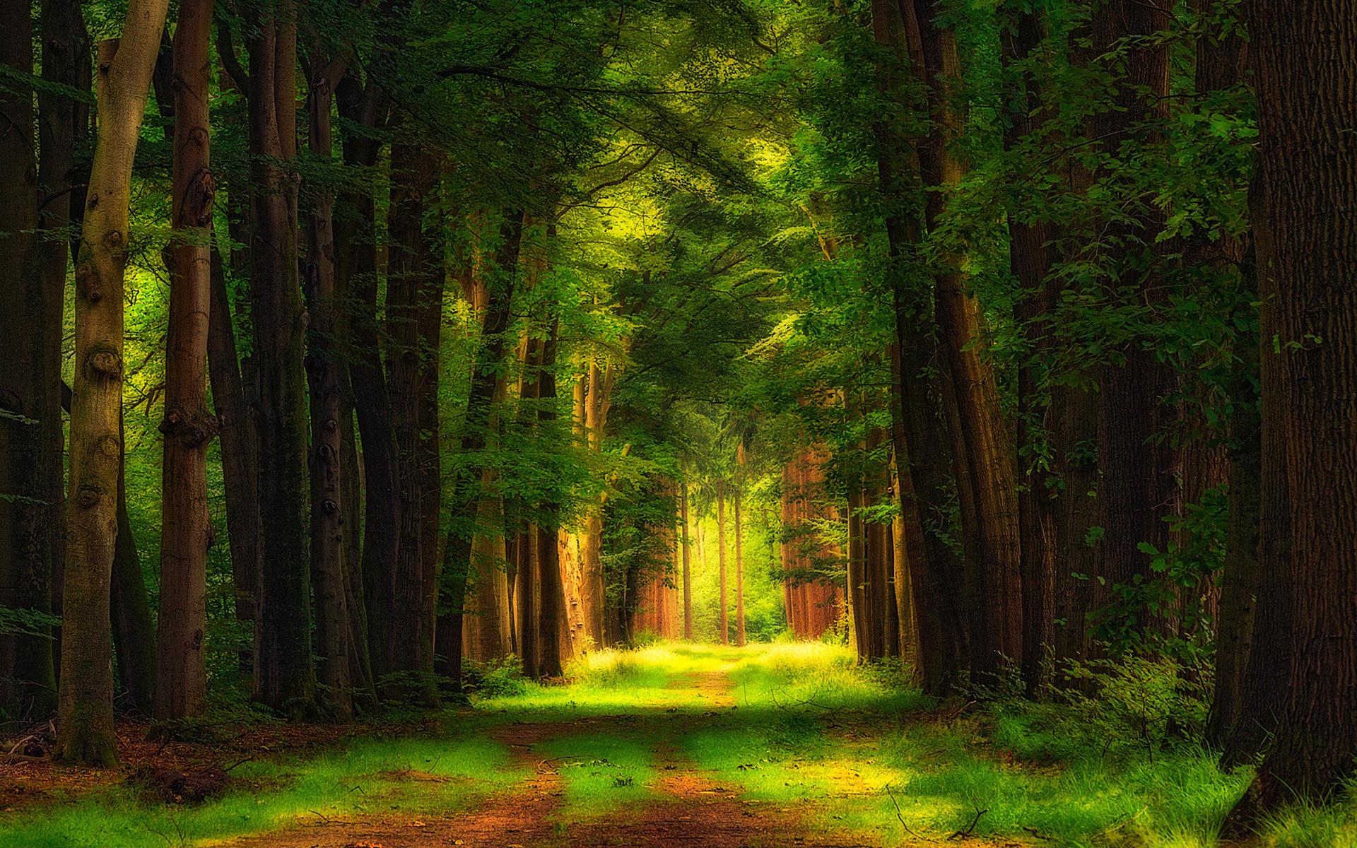 Картинки идет дождь в лесу потом