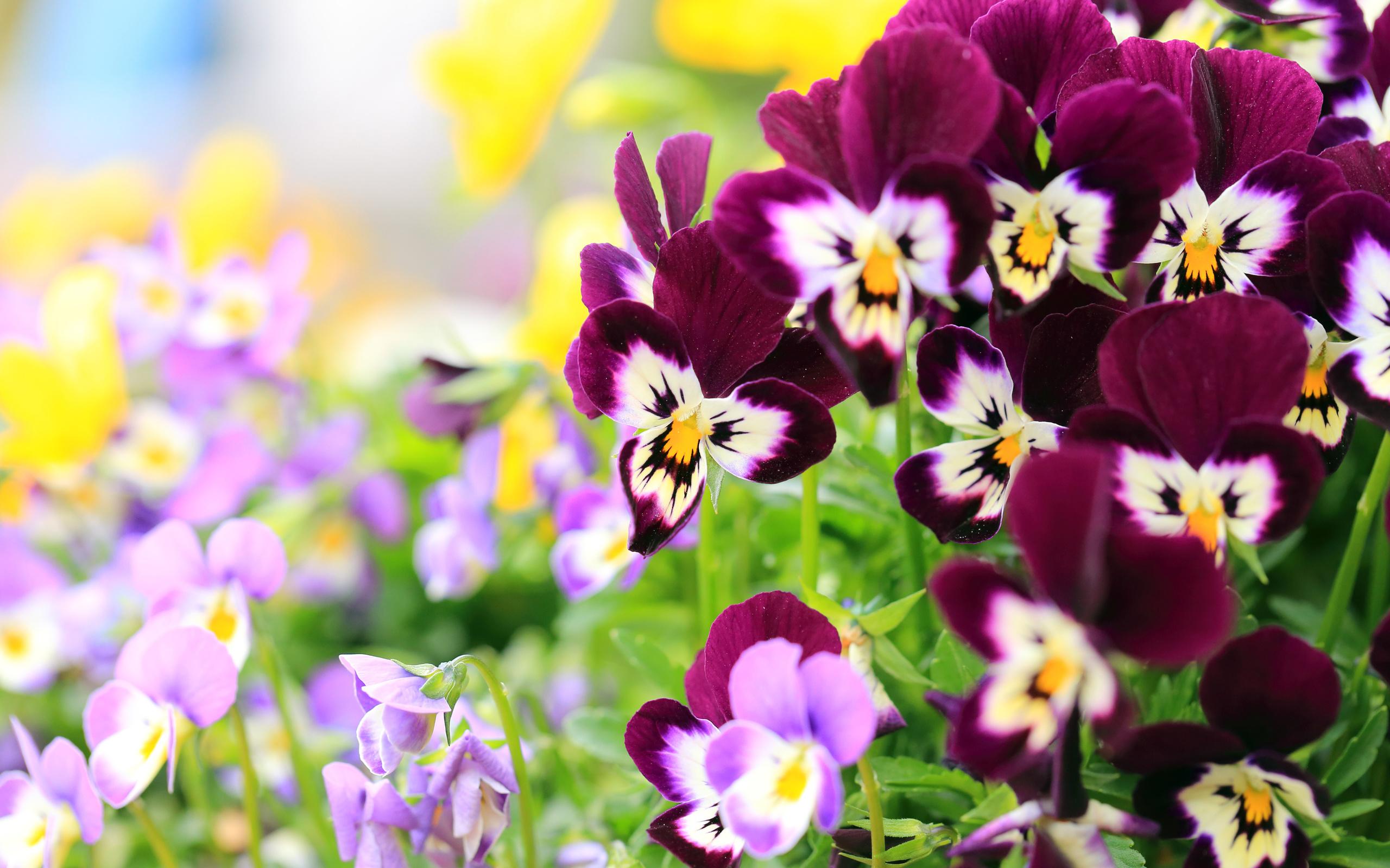 Любые картинки с цветами