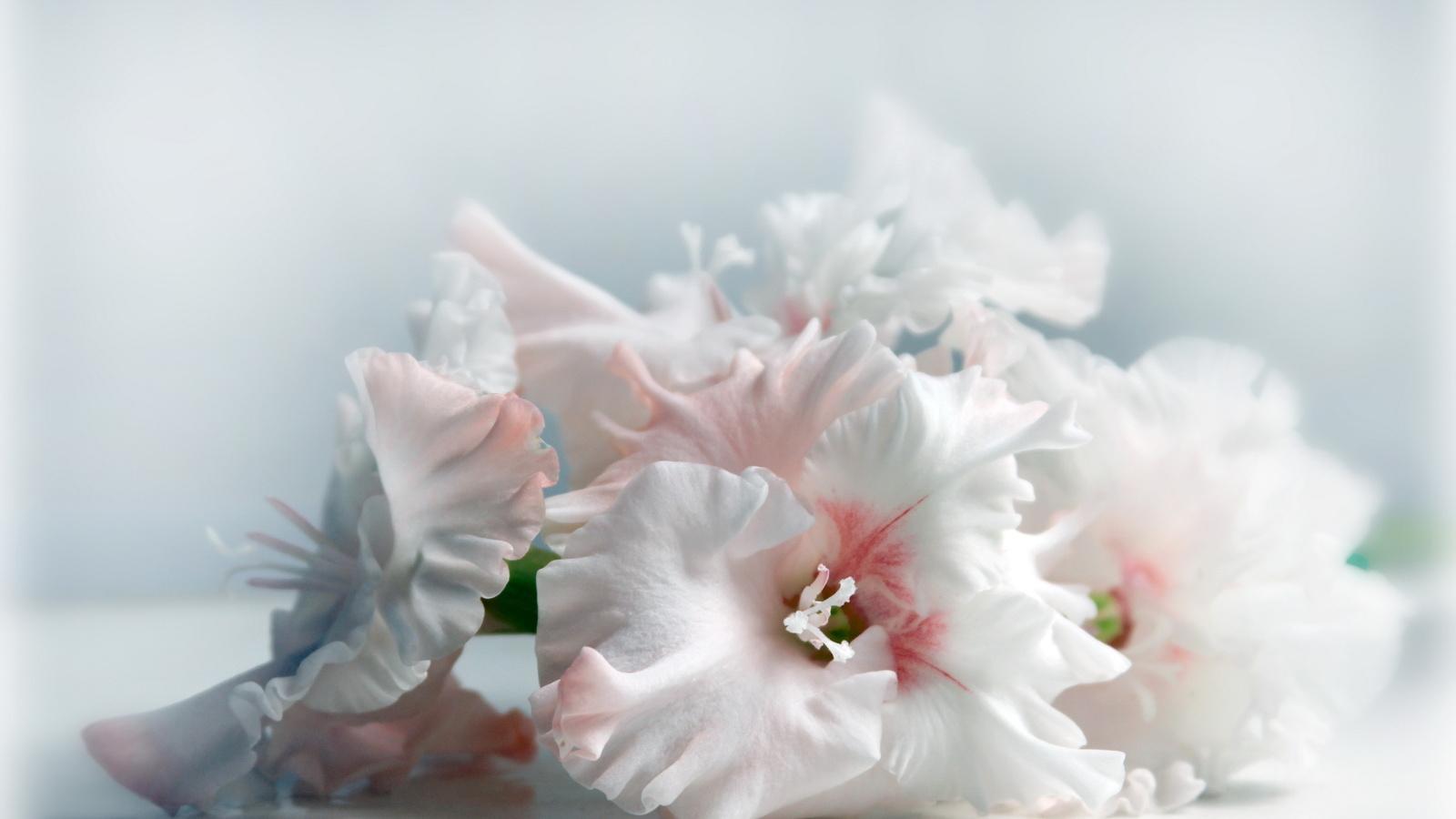 Картинки с надписью нежный цветок