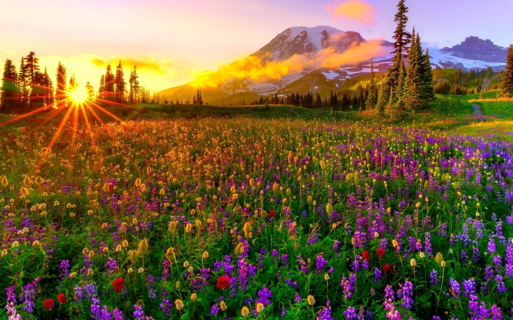 обзорными очень красивые картинки с природой и цветами первой тысячелетии