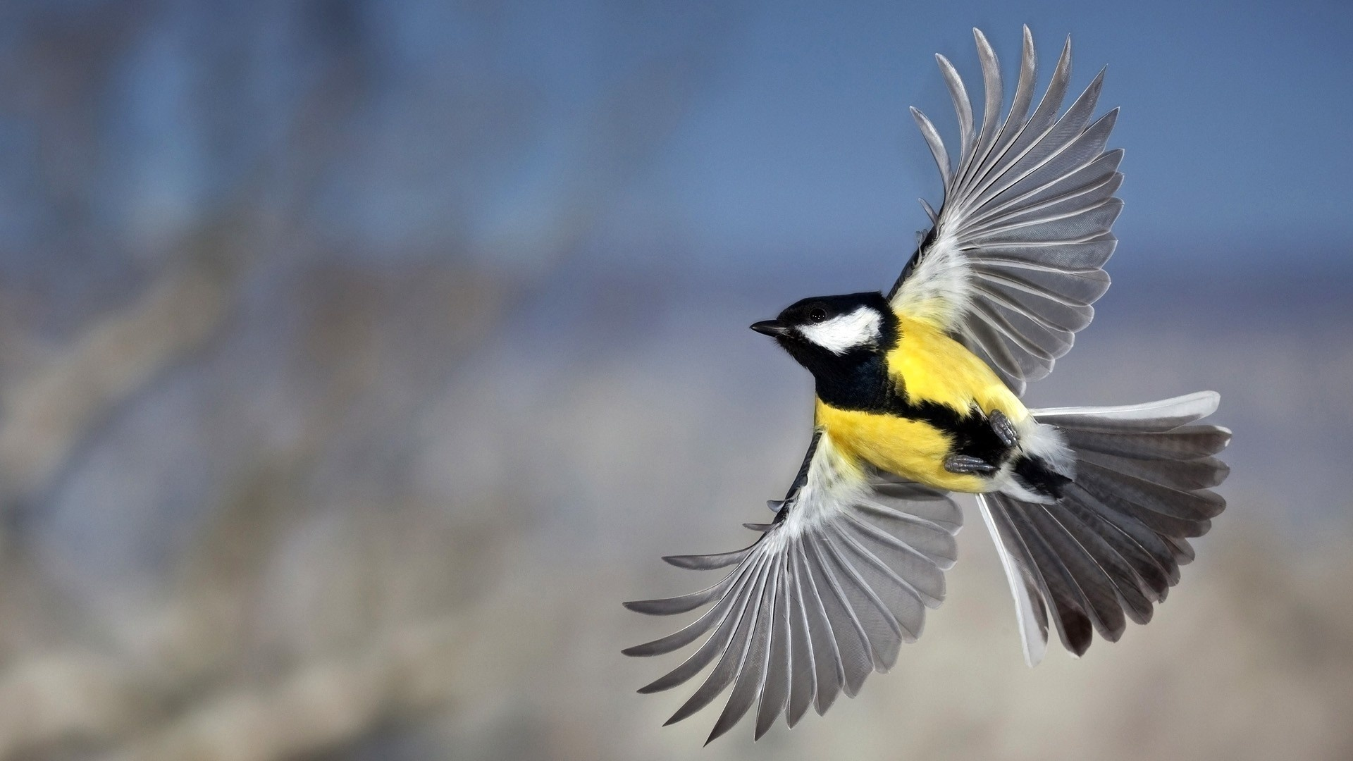 существующие с птицами картинки про необработанного края