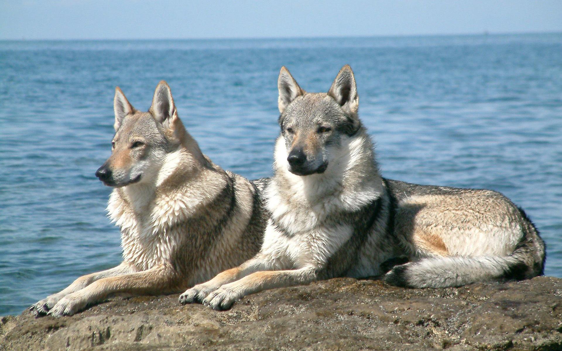 волк и море картинки камчатке это