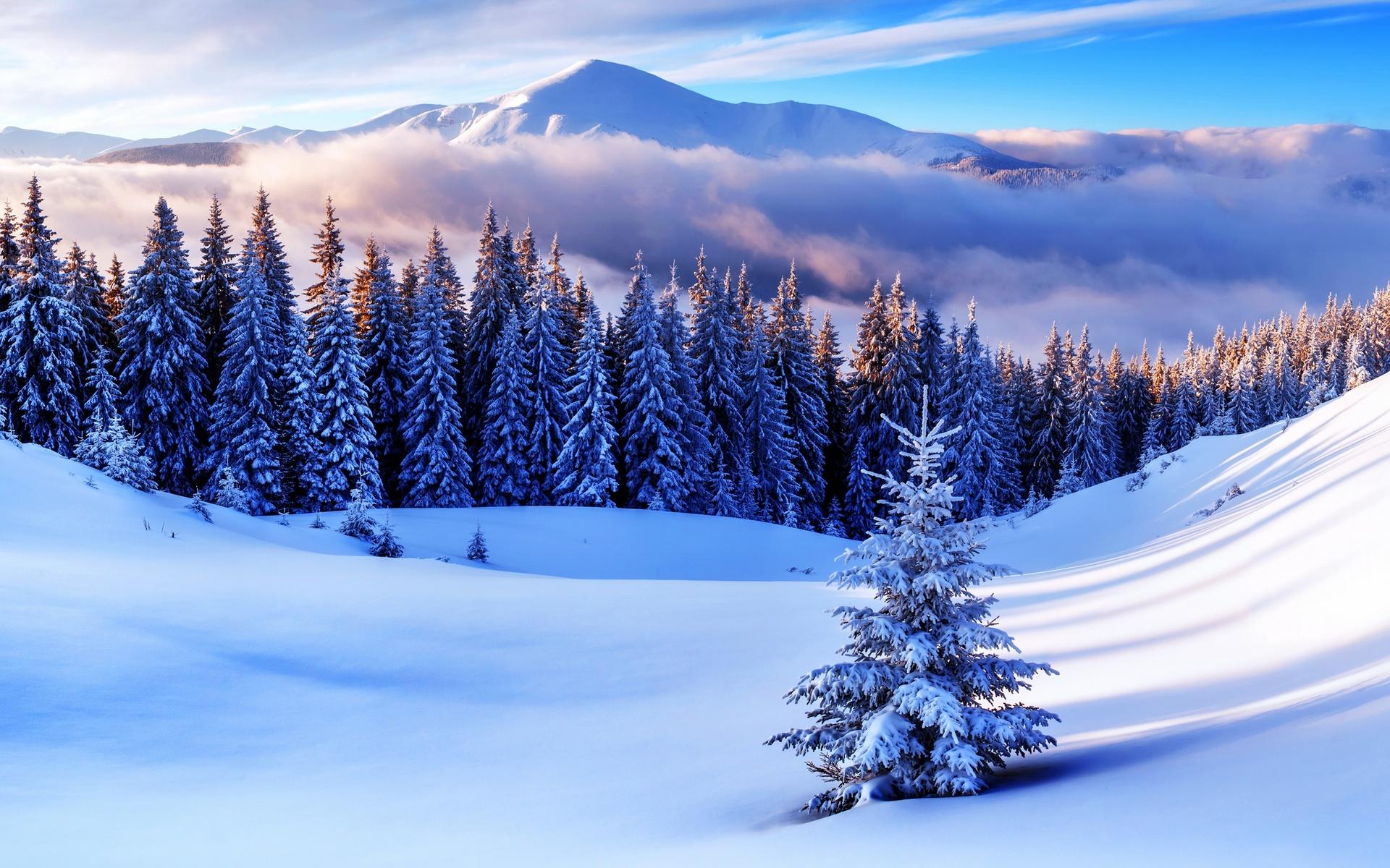 фото бои зима картинки была