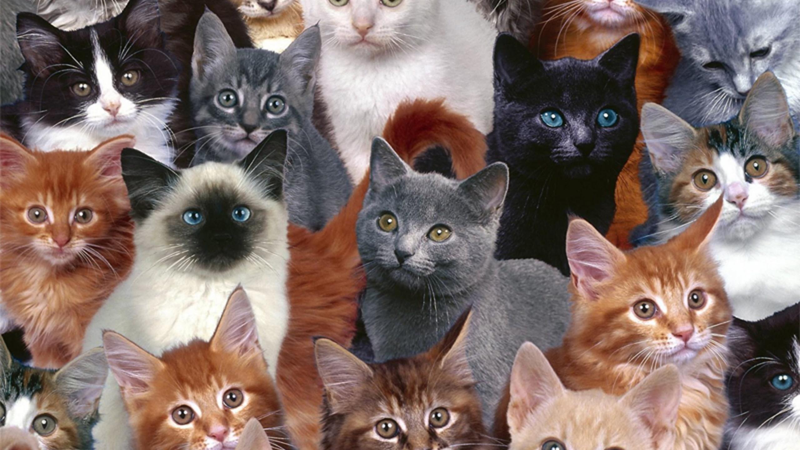 Это сколько котов на картинке