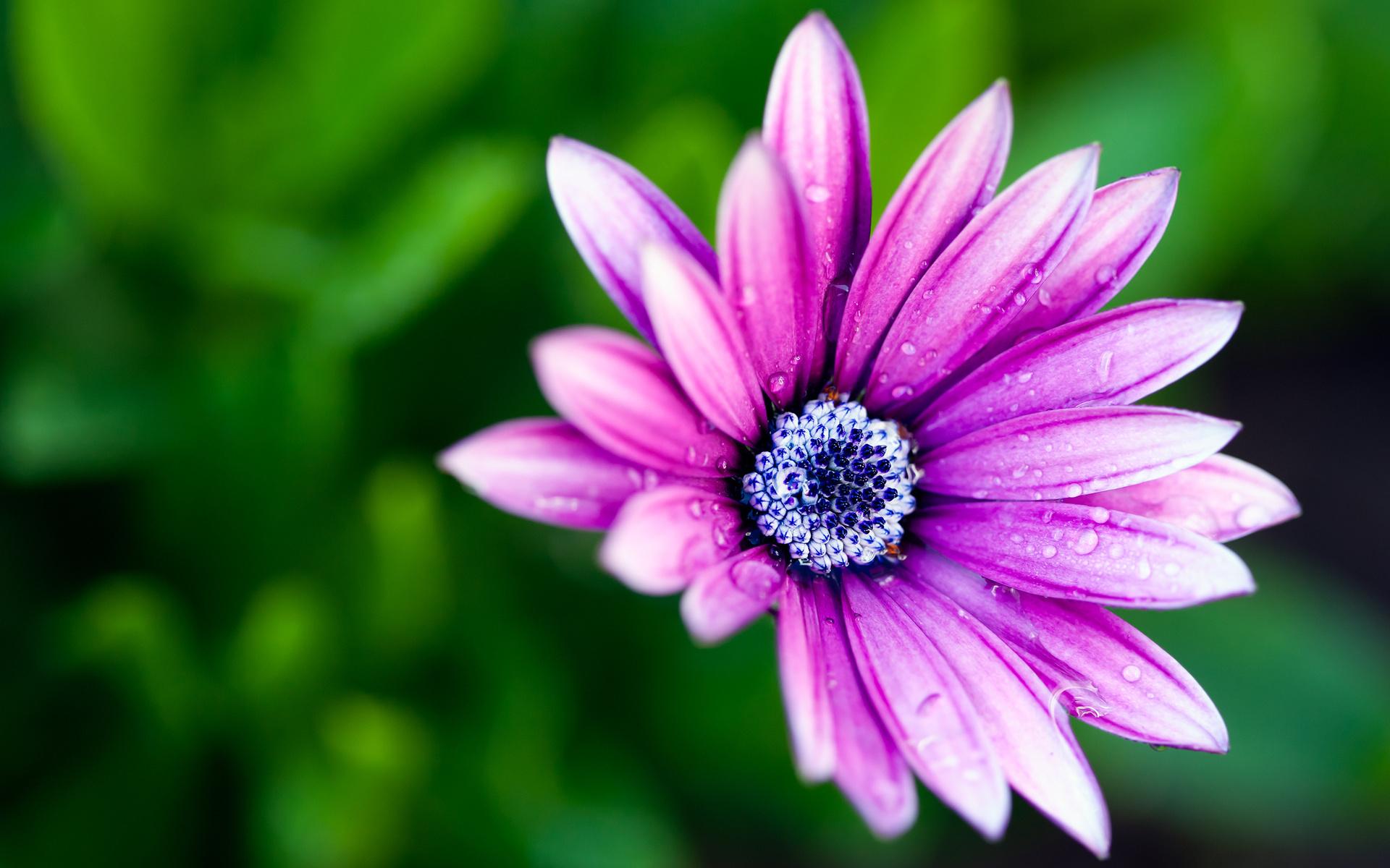 Картинка четырех цветов