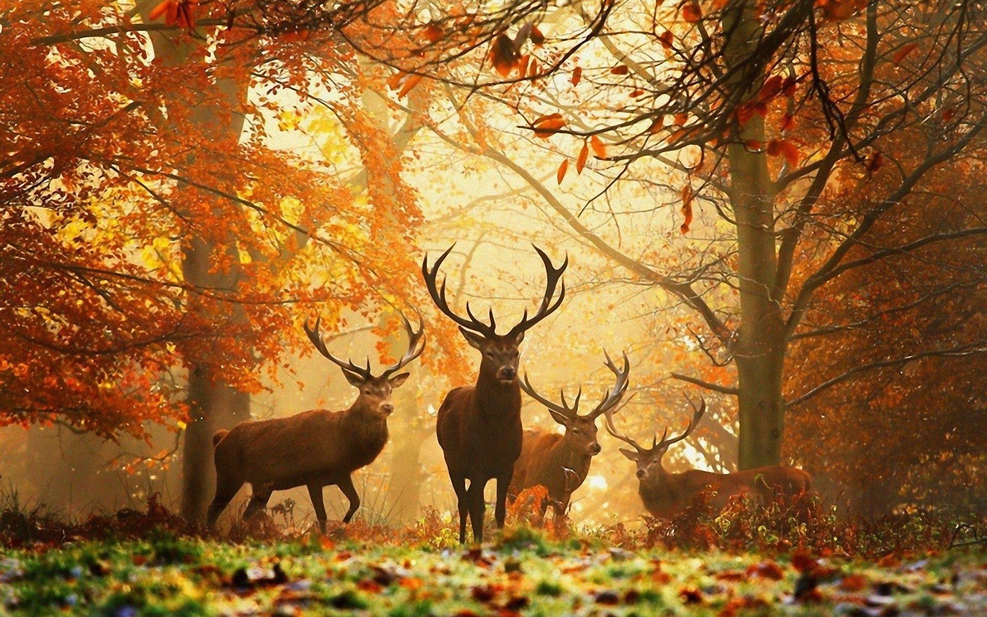 Картинки природы осень на рабочий стол