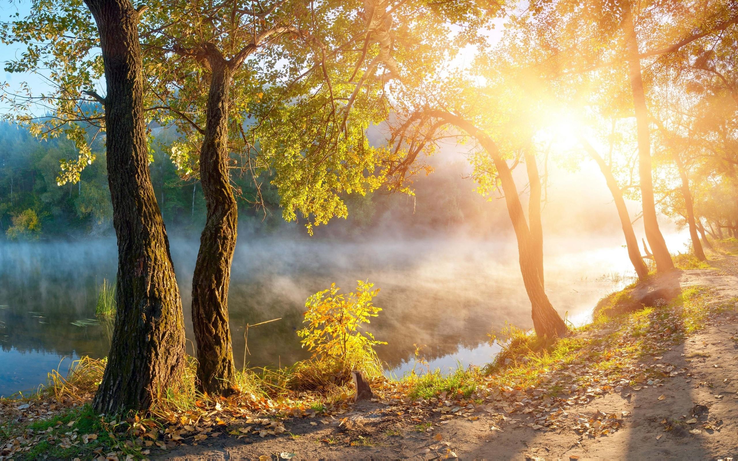 доброе утро картинки с лесом осенним подъезде купите недорого
