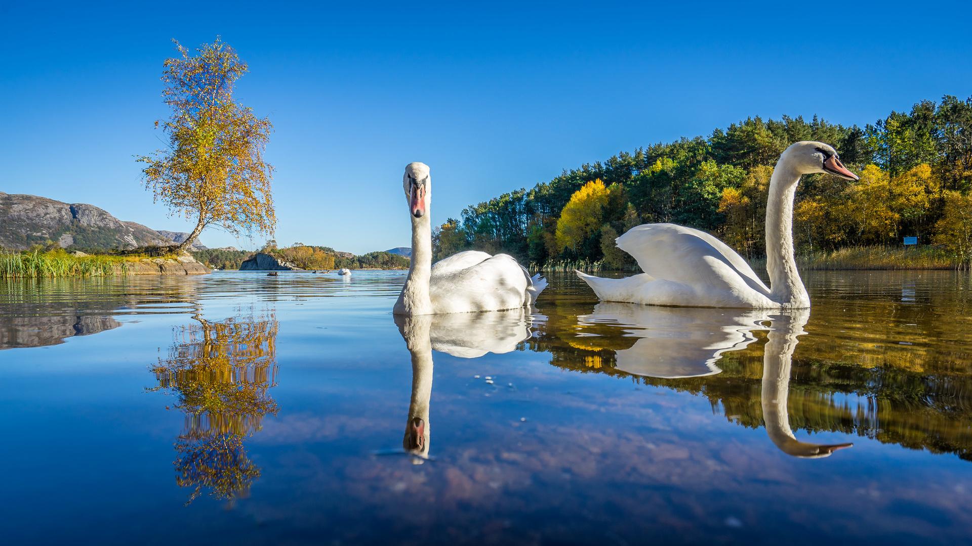как картинки лебединое озеро природа если дарю, должно