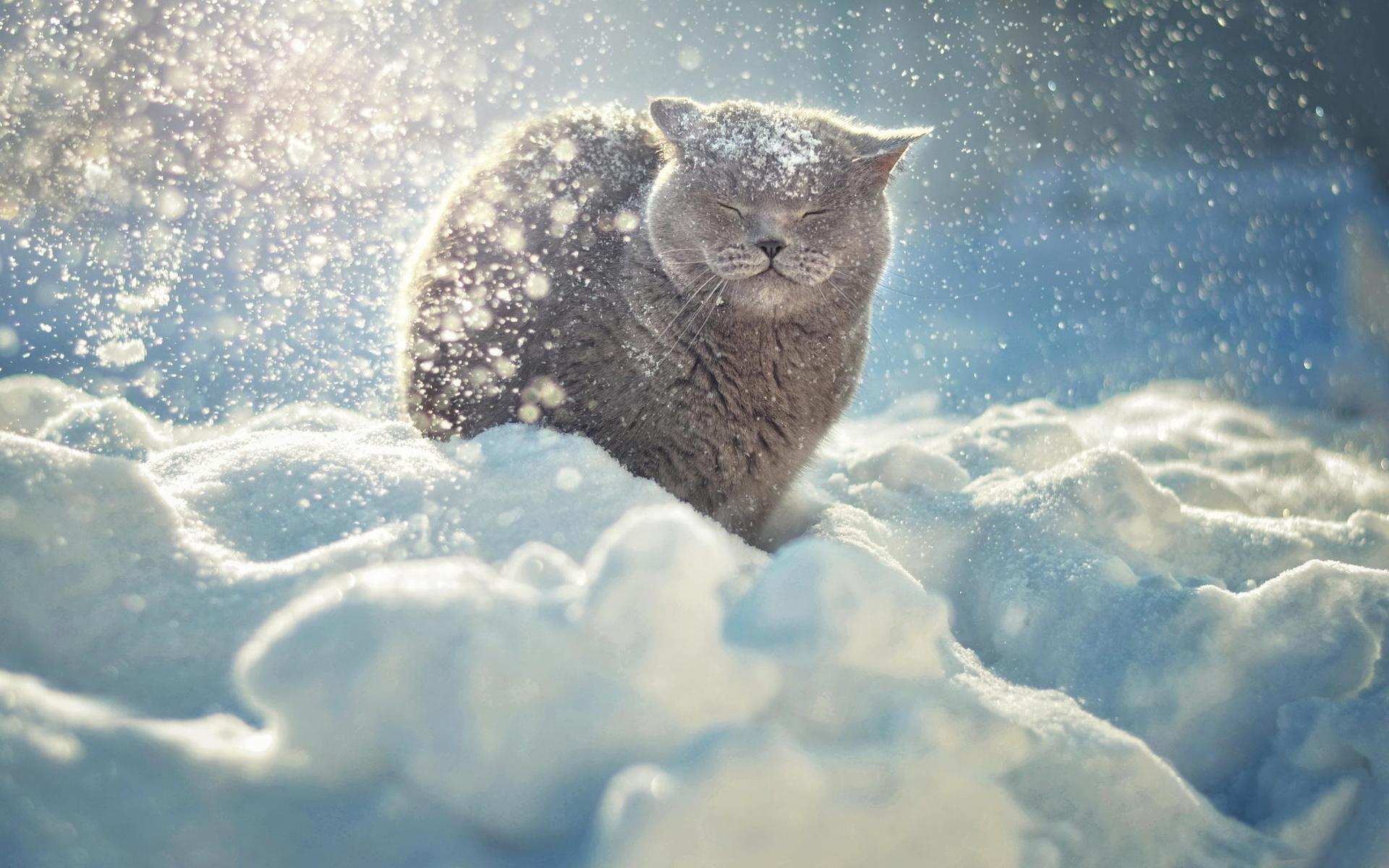 Днем рождения, картинки снег прикольные