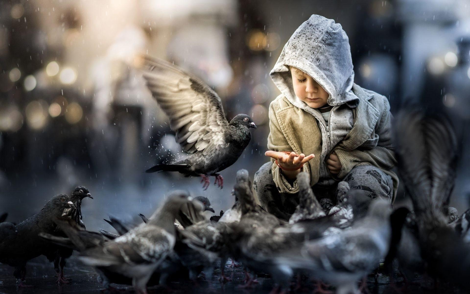 сожалению, картинки про птиц и людей губка