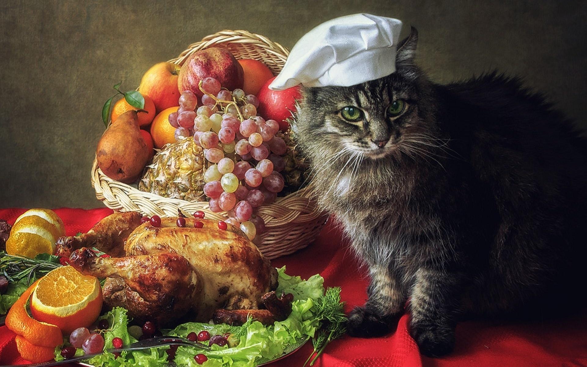 Картинки котики с фруктами лечить