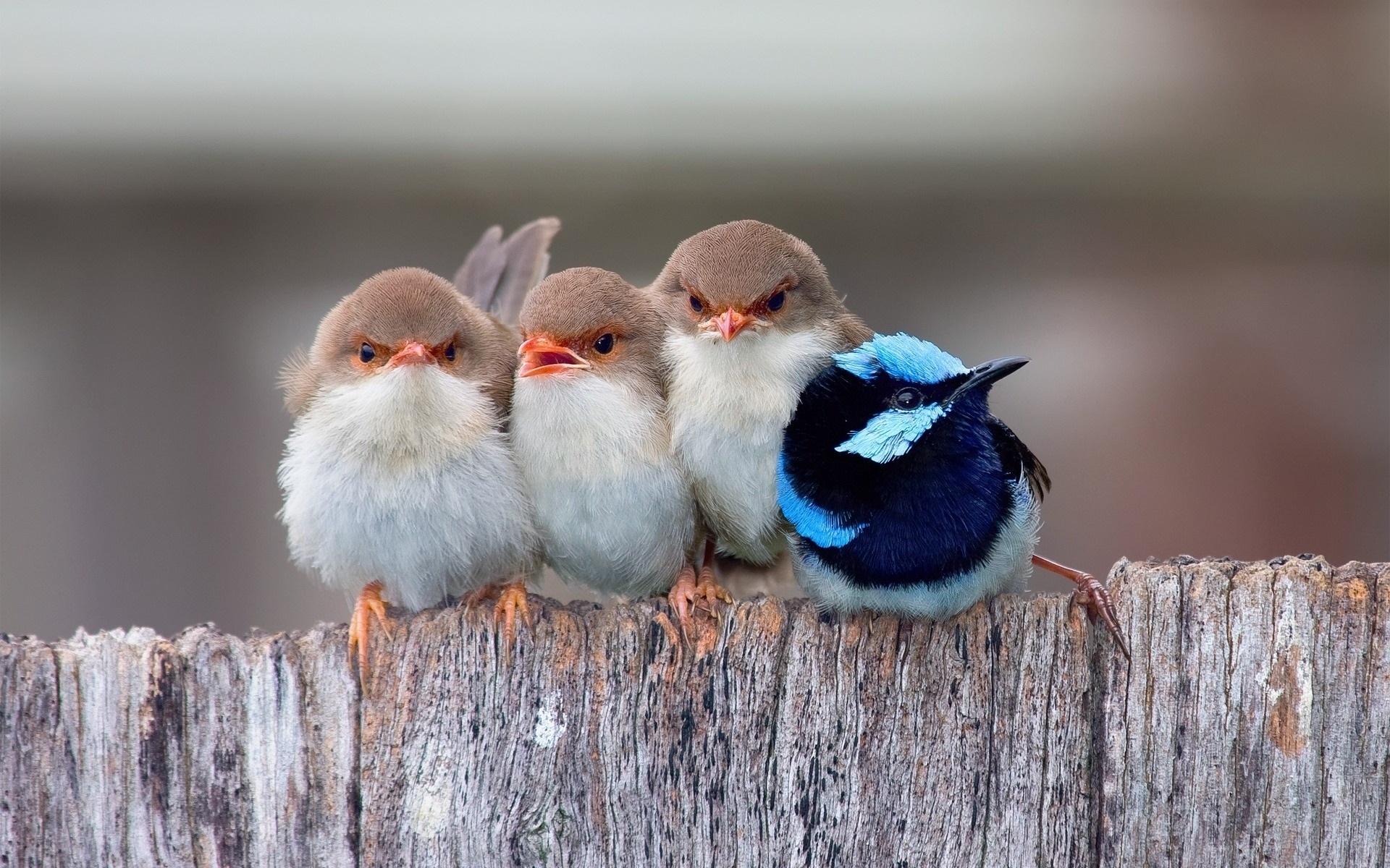 прикольные картинки с птицами пассаж крупное