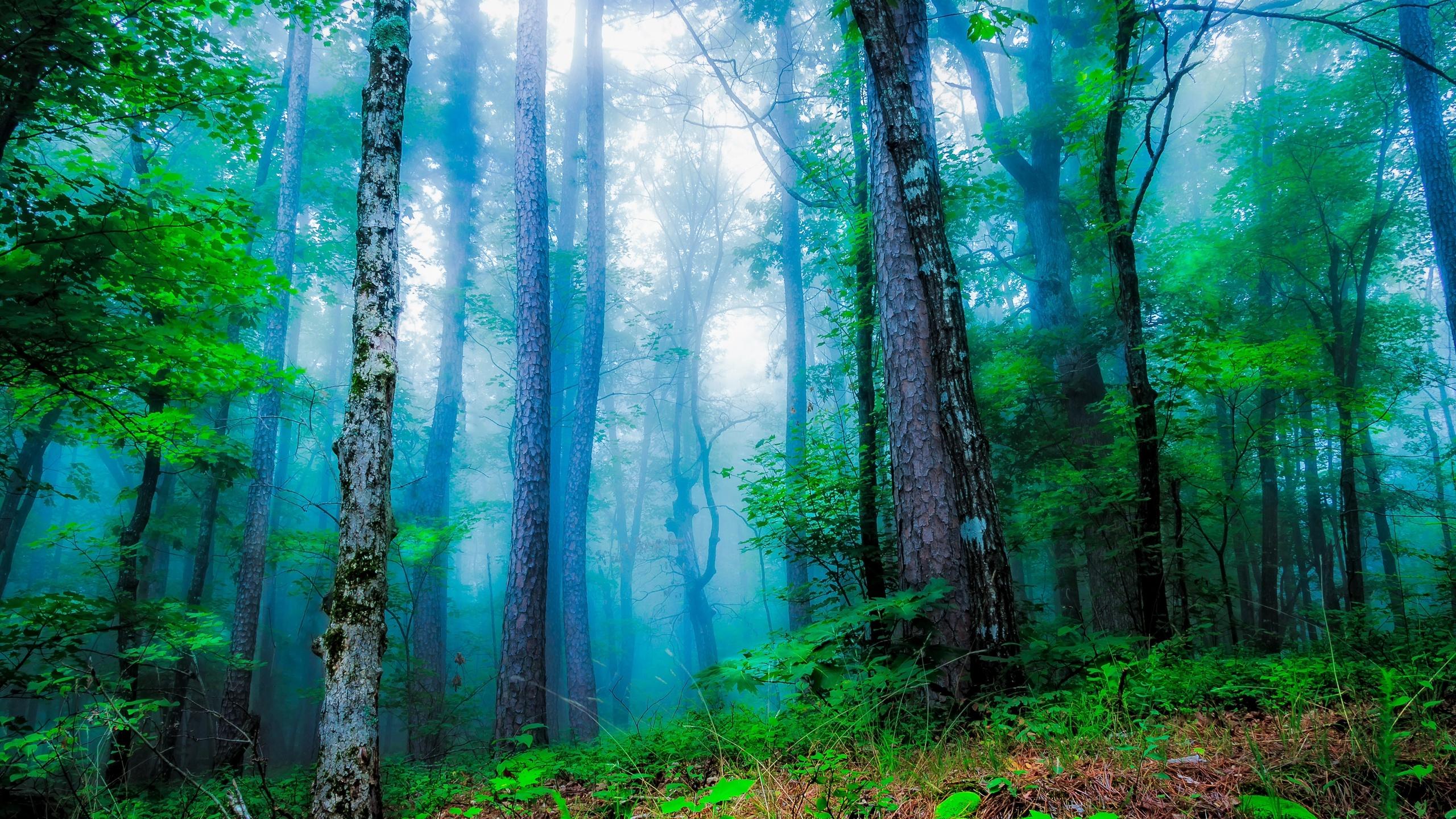 молодец такую красивая открытка леса попросил подписчиков