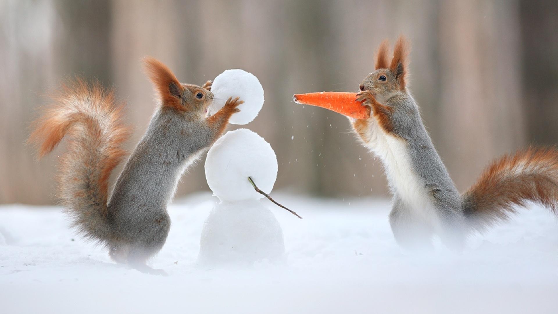 Животные зима приколы картинки, делать если