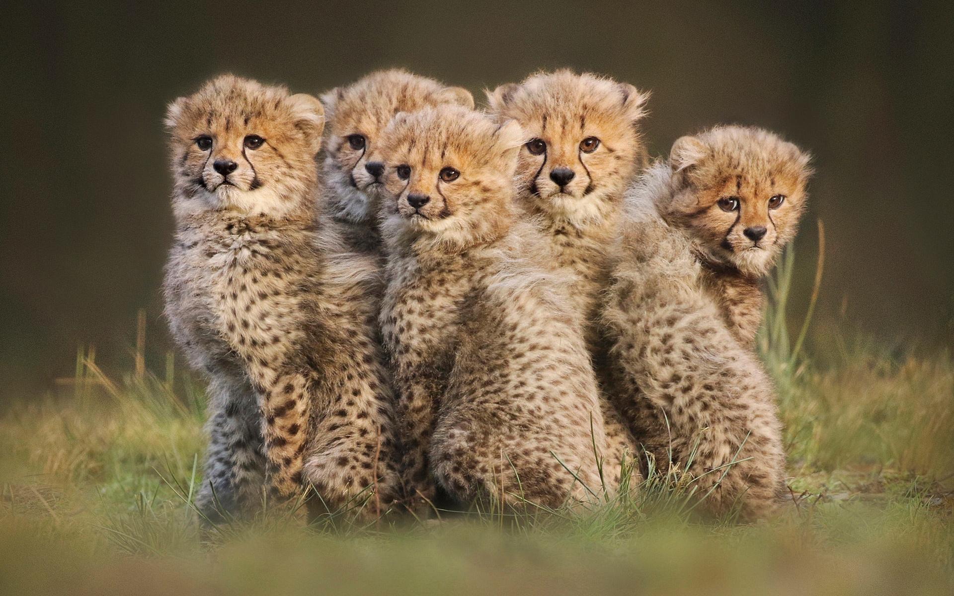 спицами пять зверей картинки семьях