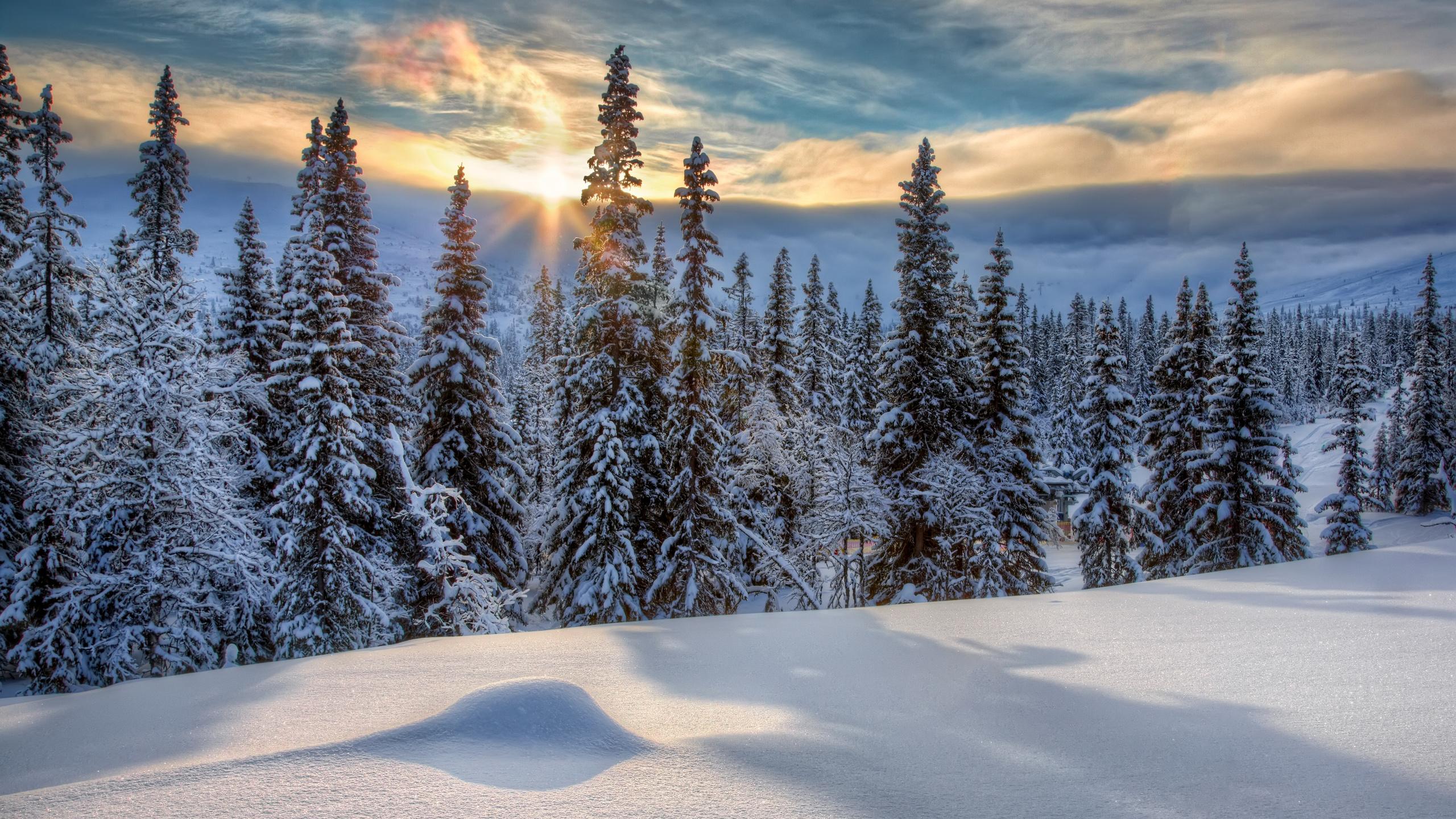 картинки зеленые ели зима снег закат барселоне можно найти