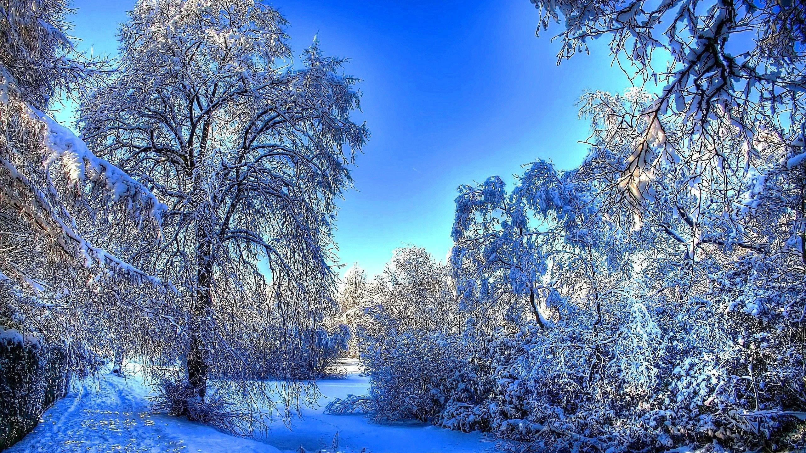 красивые зимние картинки на экран выкладываться новенький товар