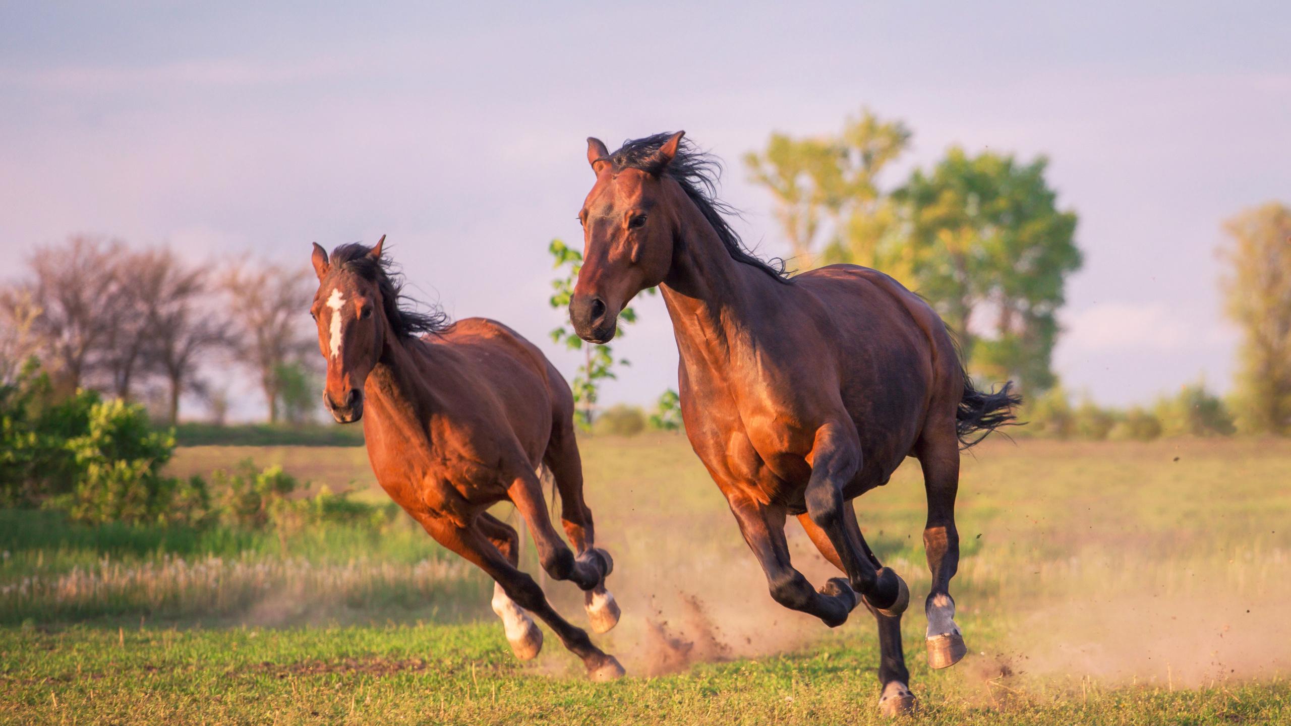 бегать как лошадь картинки распишу