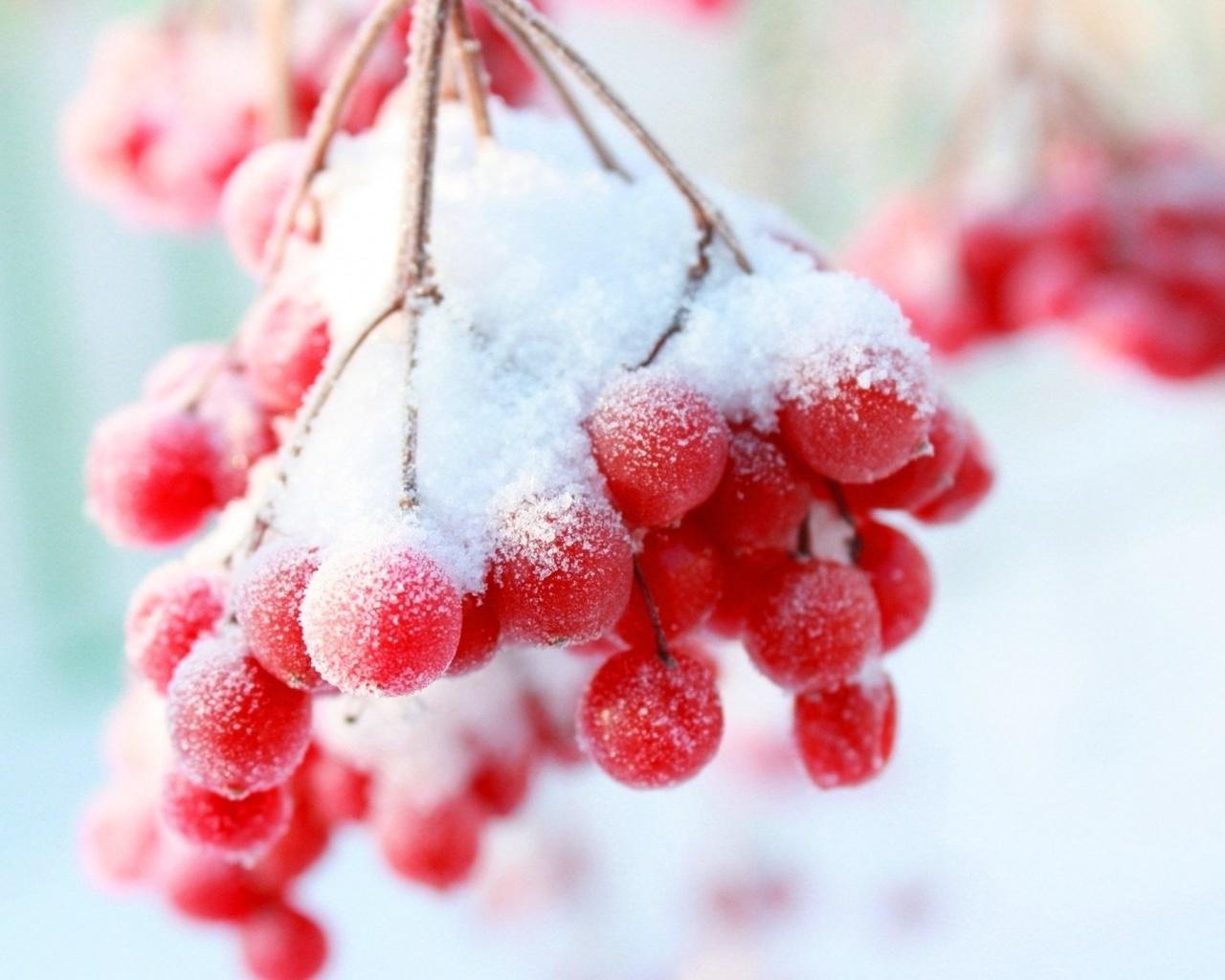 фото рябина в снегу изображение на экран что там говорить