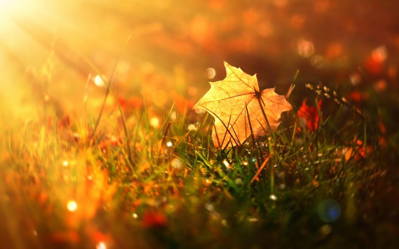 Солнце и осень картинки