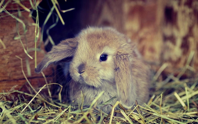 очень код кролика картинки интересно, поначалу