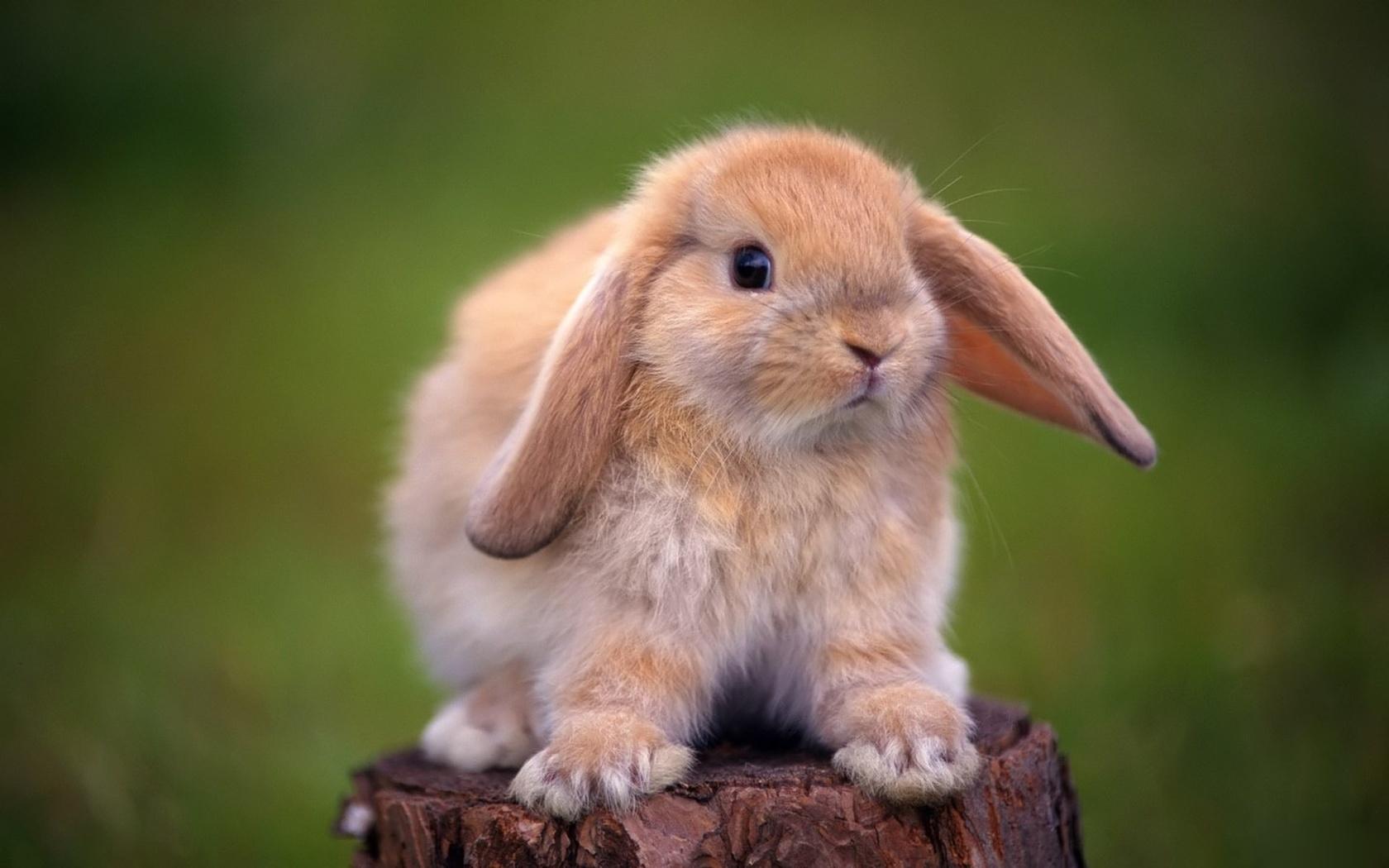 картинки с пушистыми кроликами