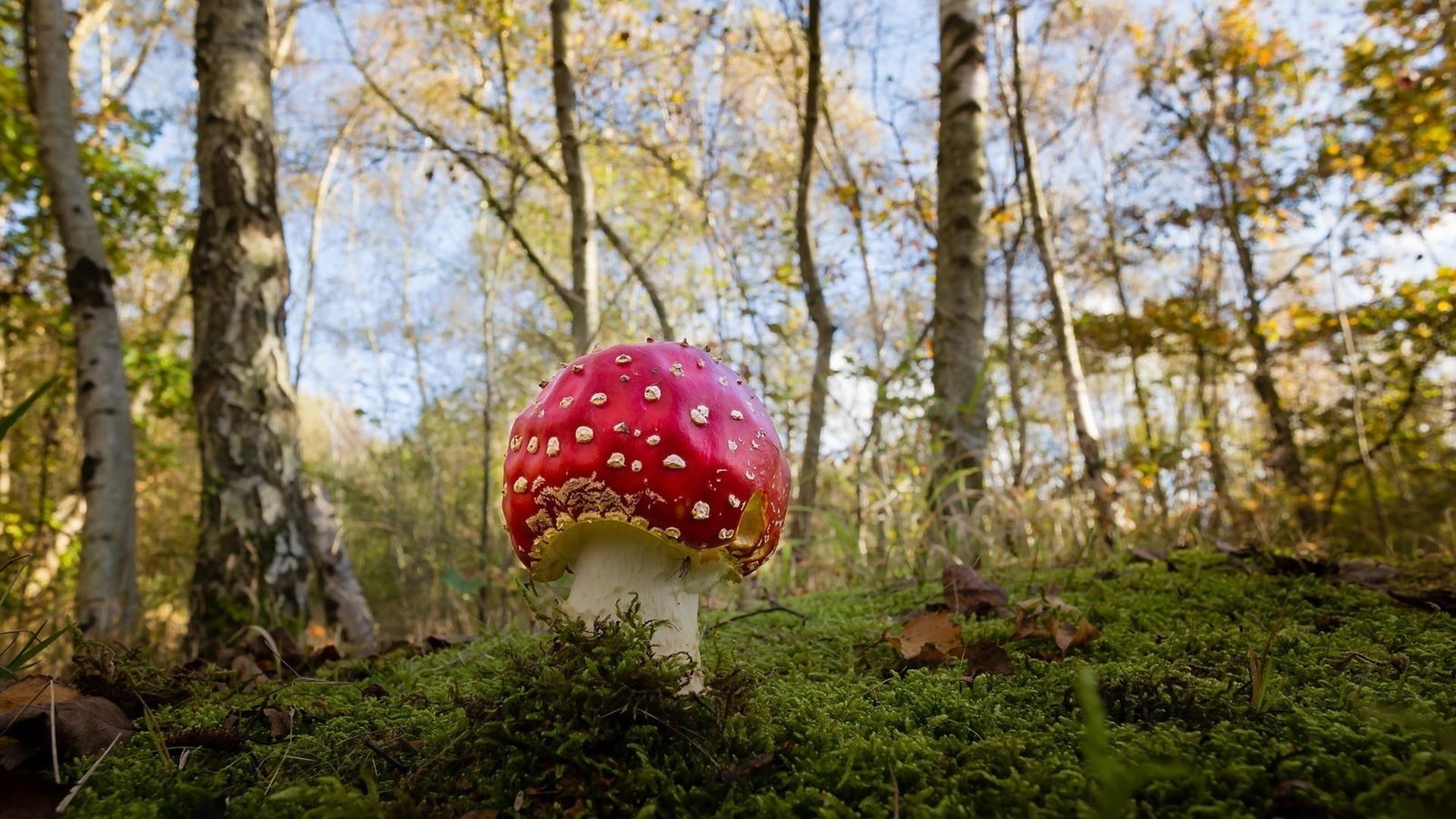 еще красивые картинки грибы в осеннем лесу красивая