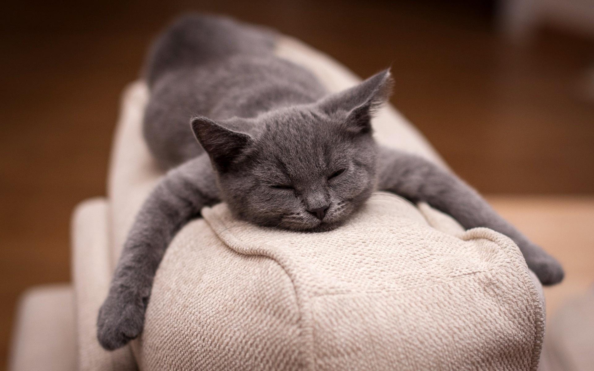 картинки котики усталые поза подходит