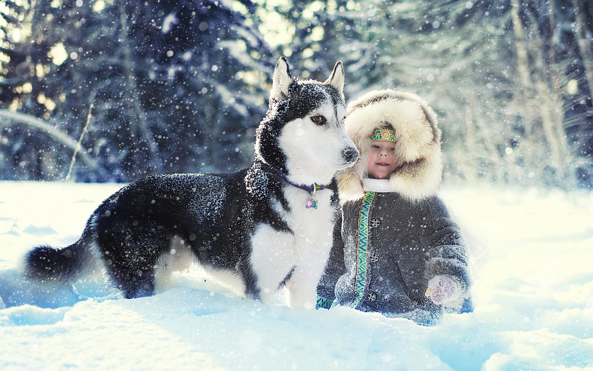 Картинки хаски снег