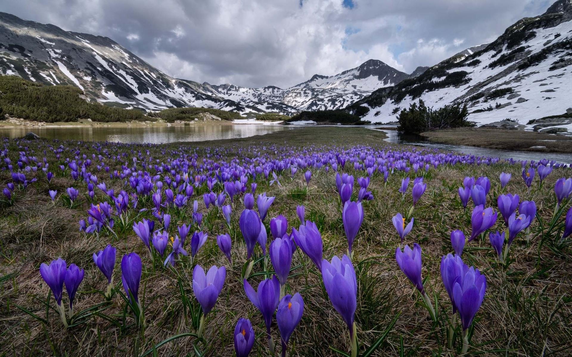 самые красивые фото природа весной короткими