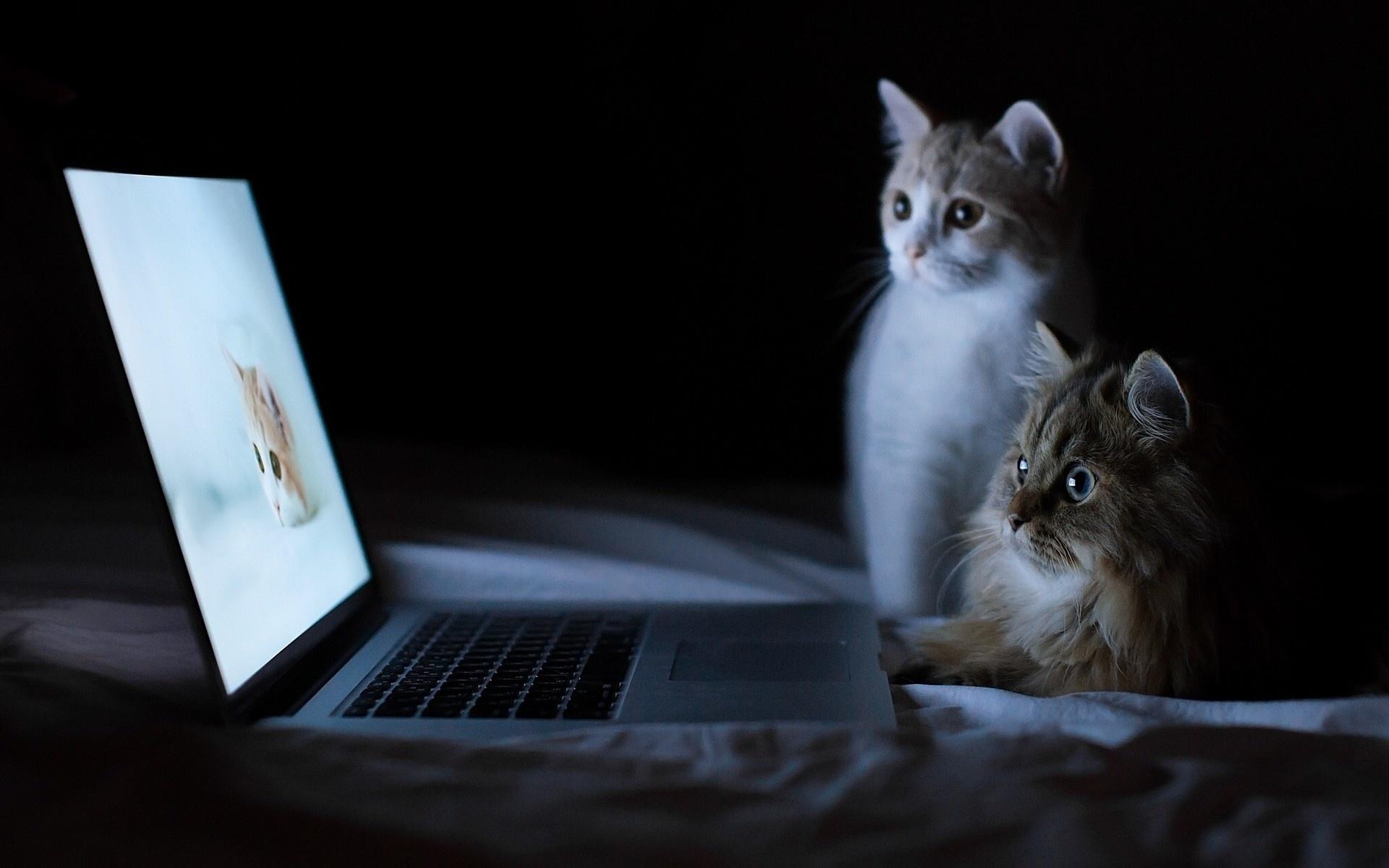 Кот у монитора картинки