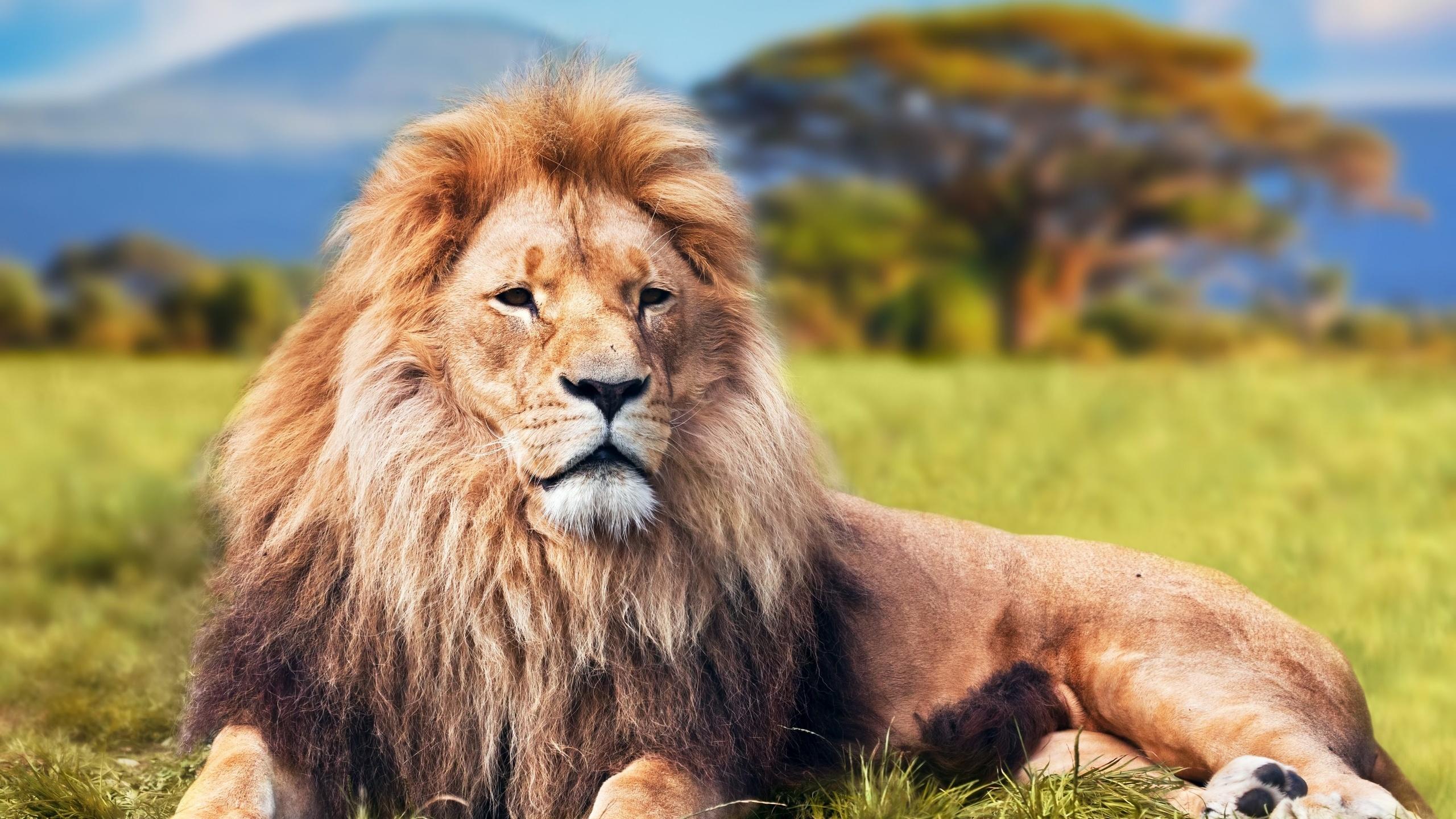 это интересные картинки льва виновников торжества