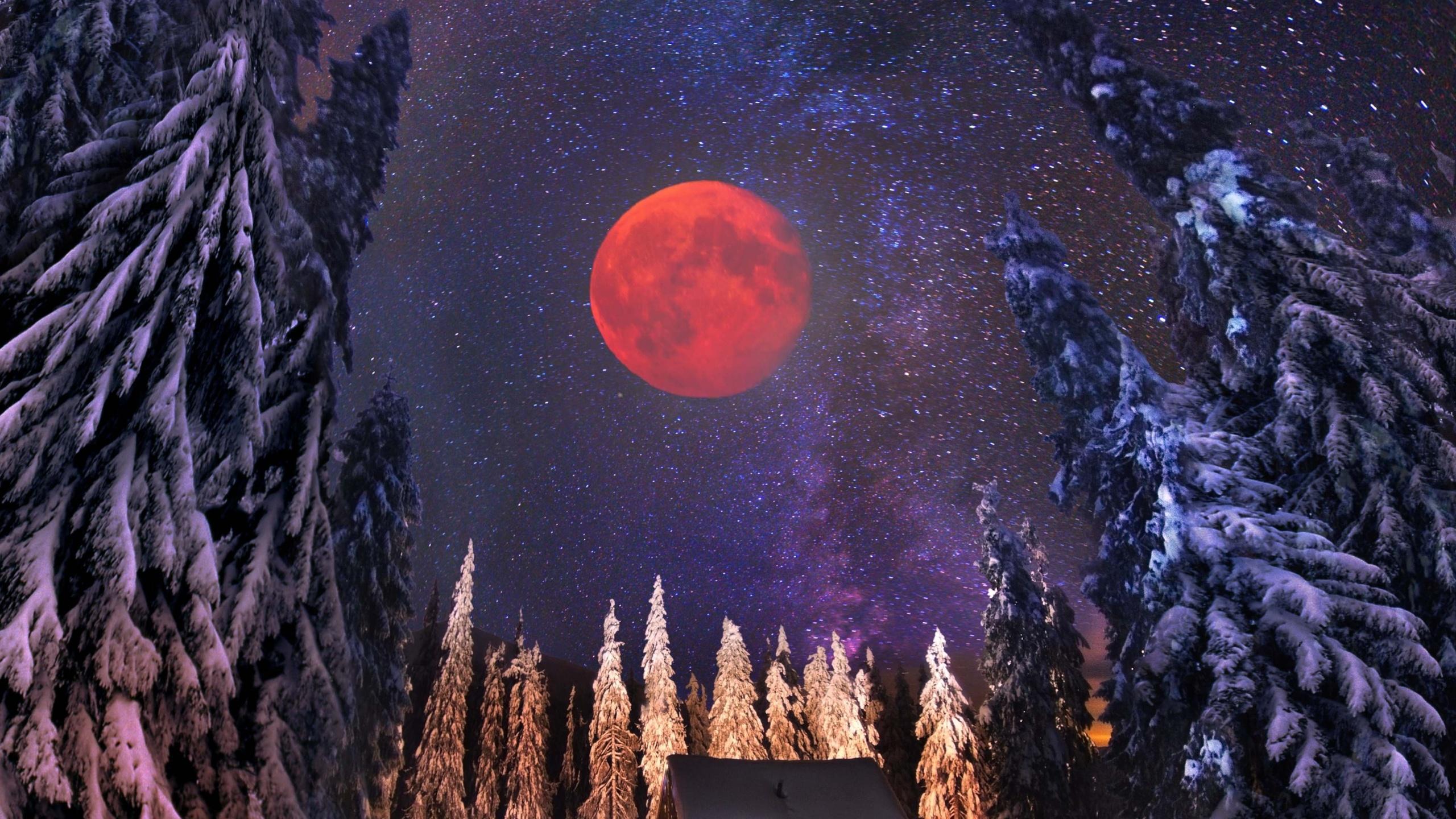 картинки ночь лес новый год можно фото