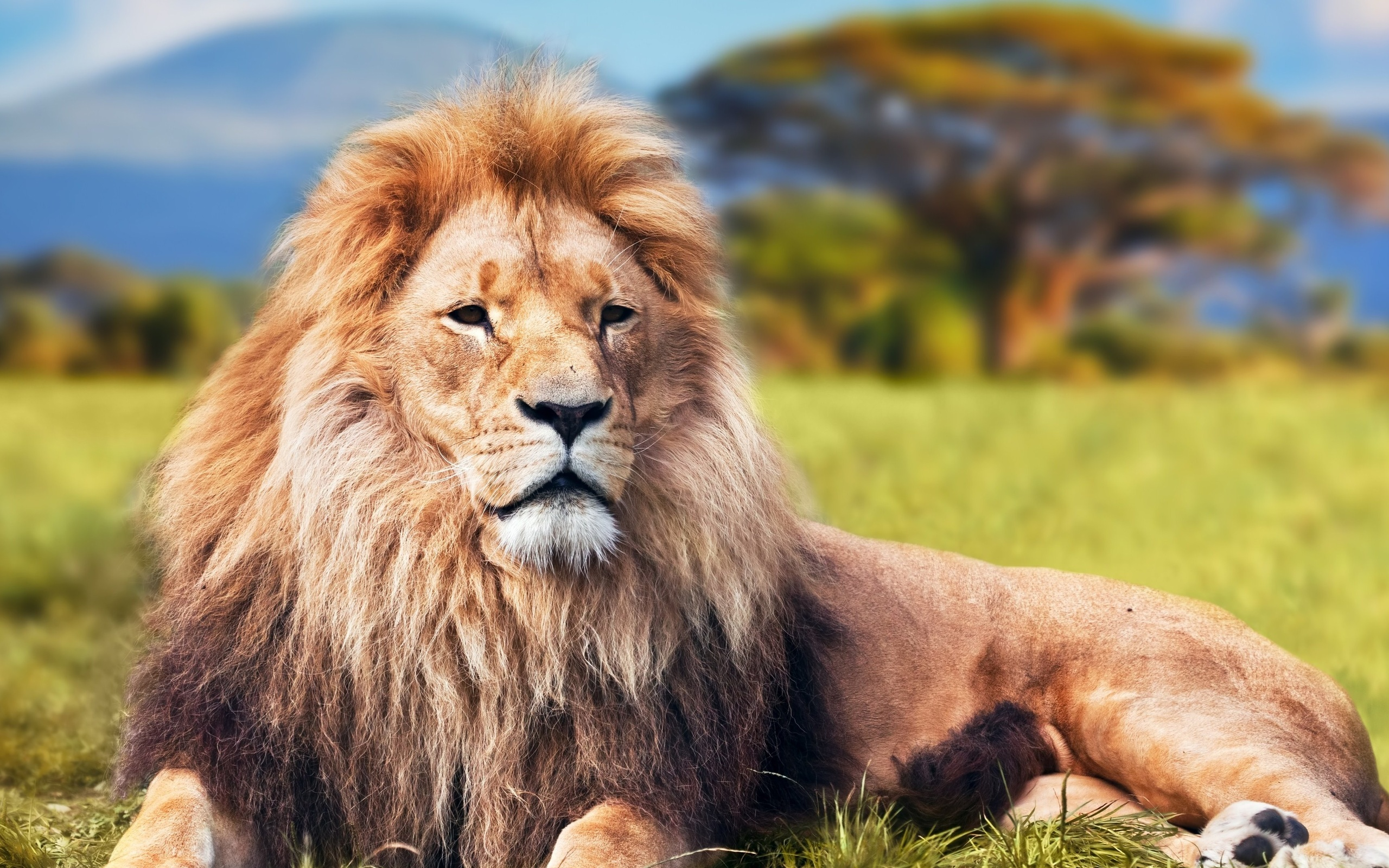 Классные картинки льва, сделать