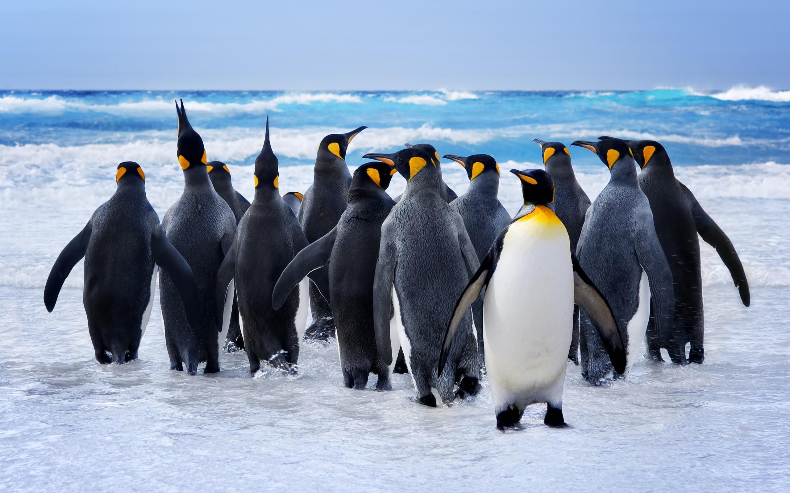 Картинки про пингвина