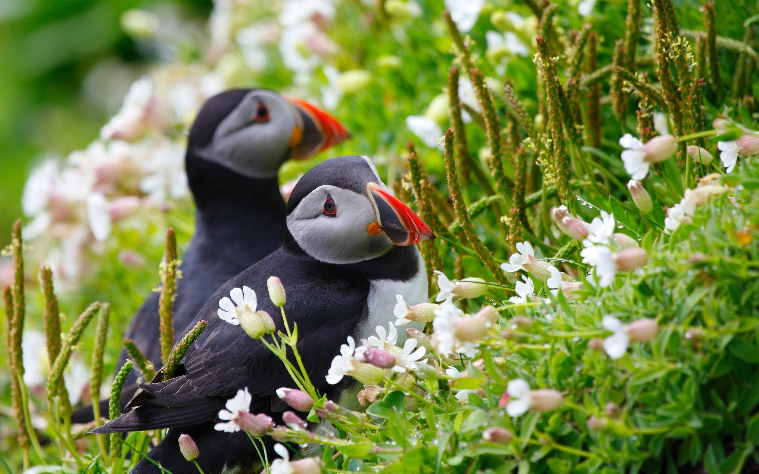 Фото картинок животных птиц