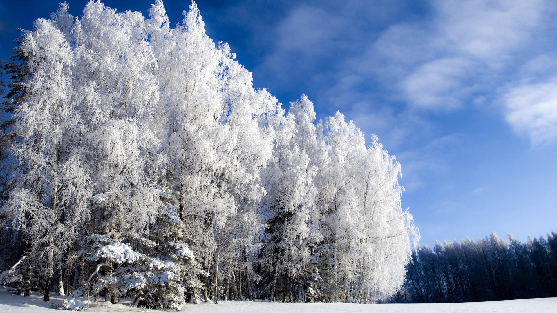 риме фотографии о красоте зимы отключить