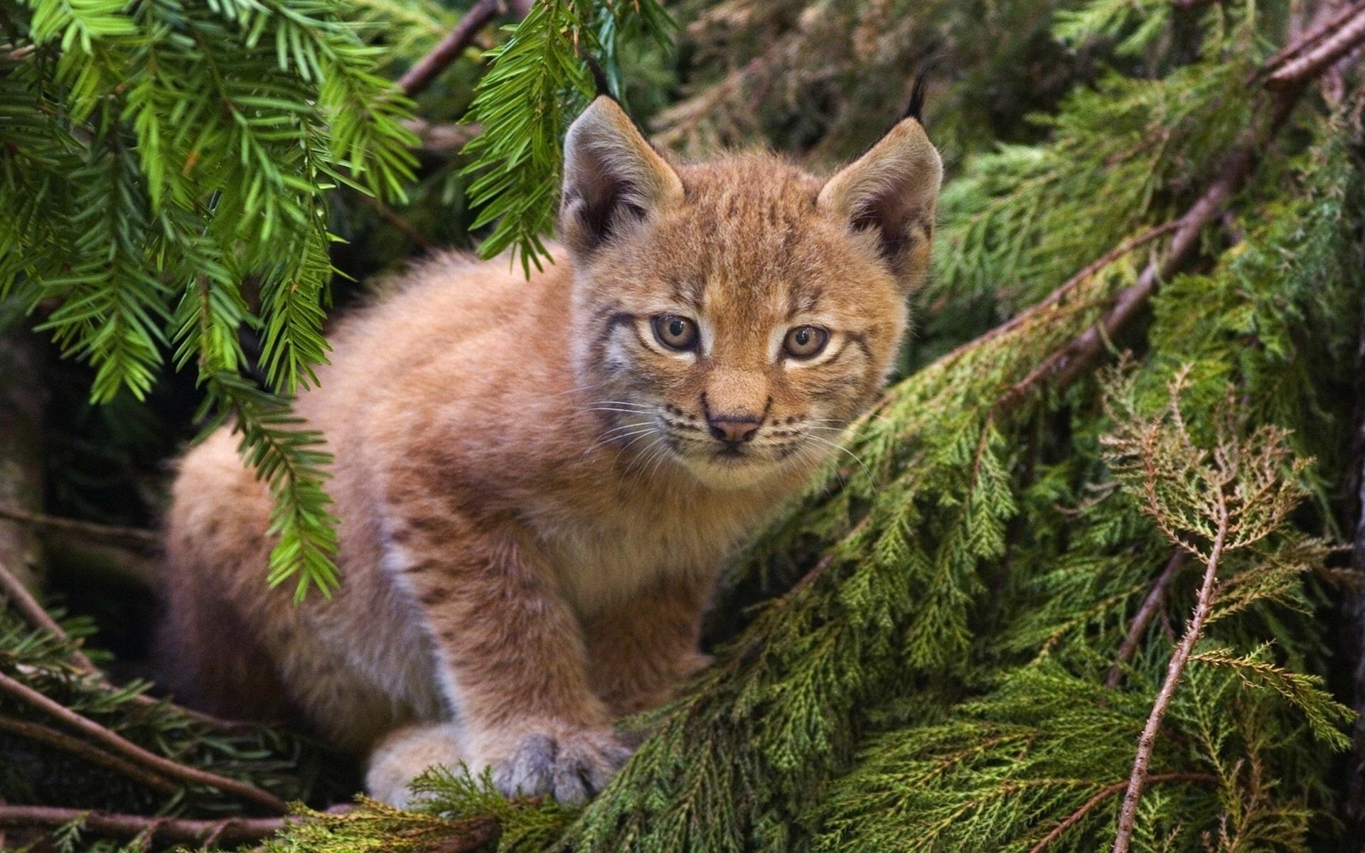 Яндекс картинки, картинки с лесными зверями