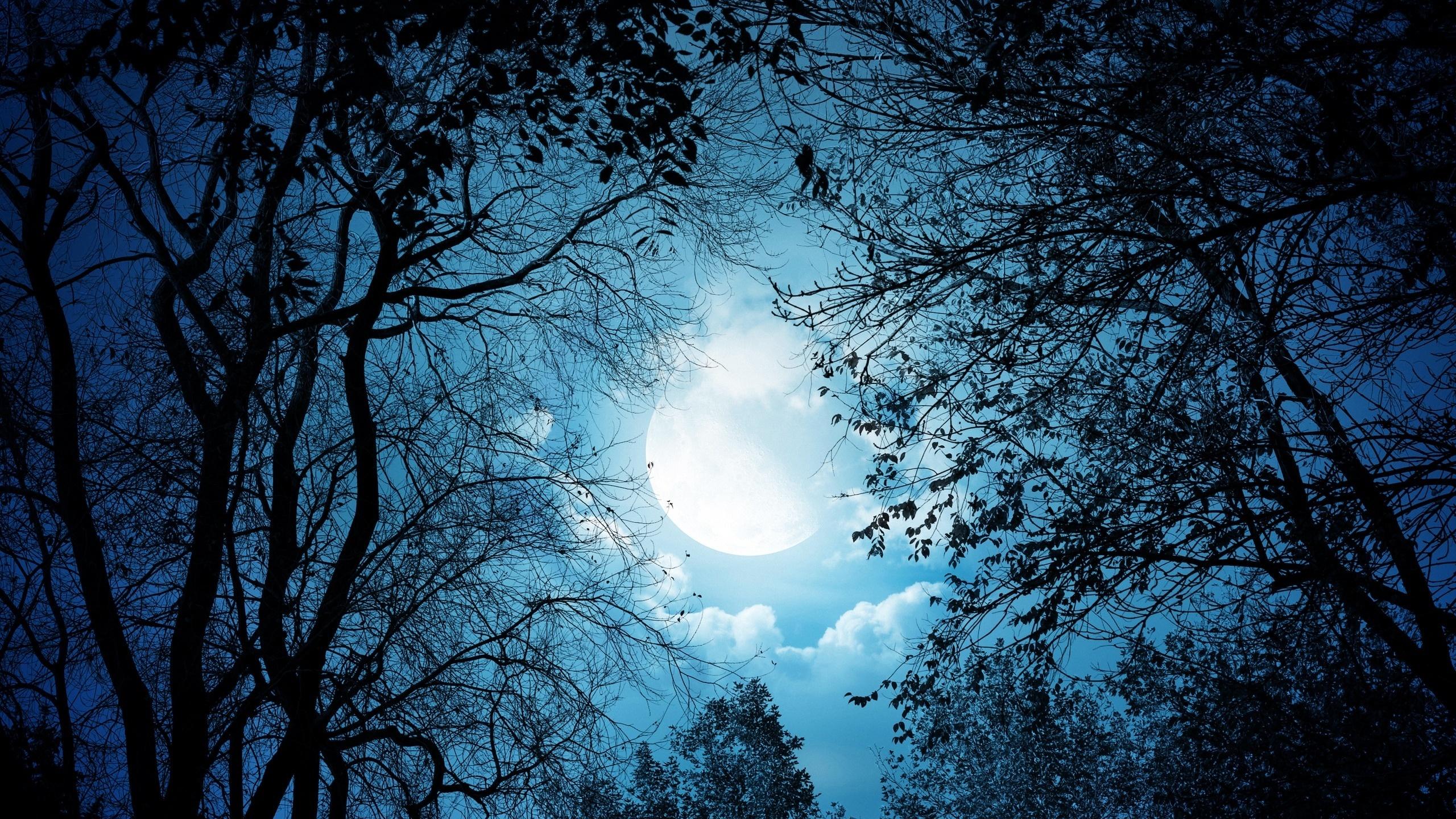 купить картинки деревьев ночью прикреплённым