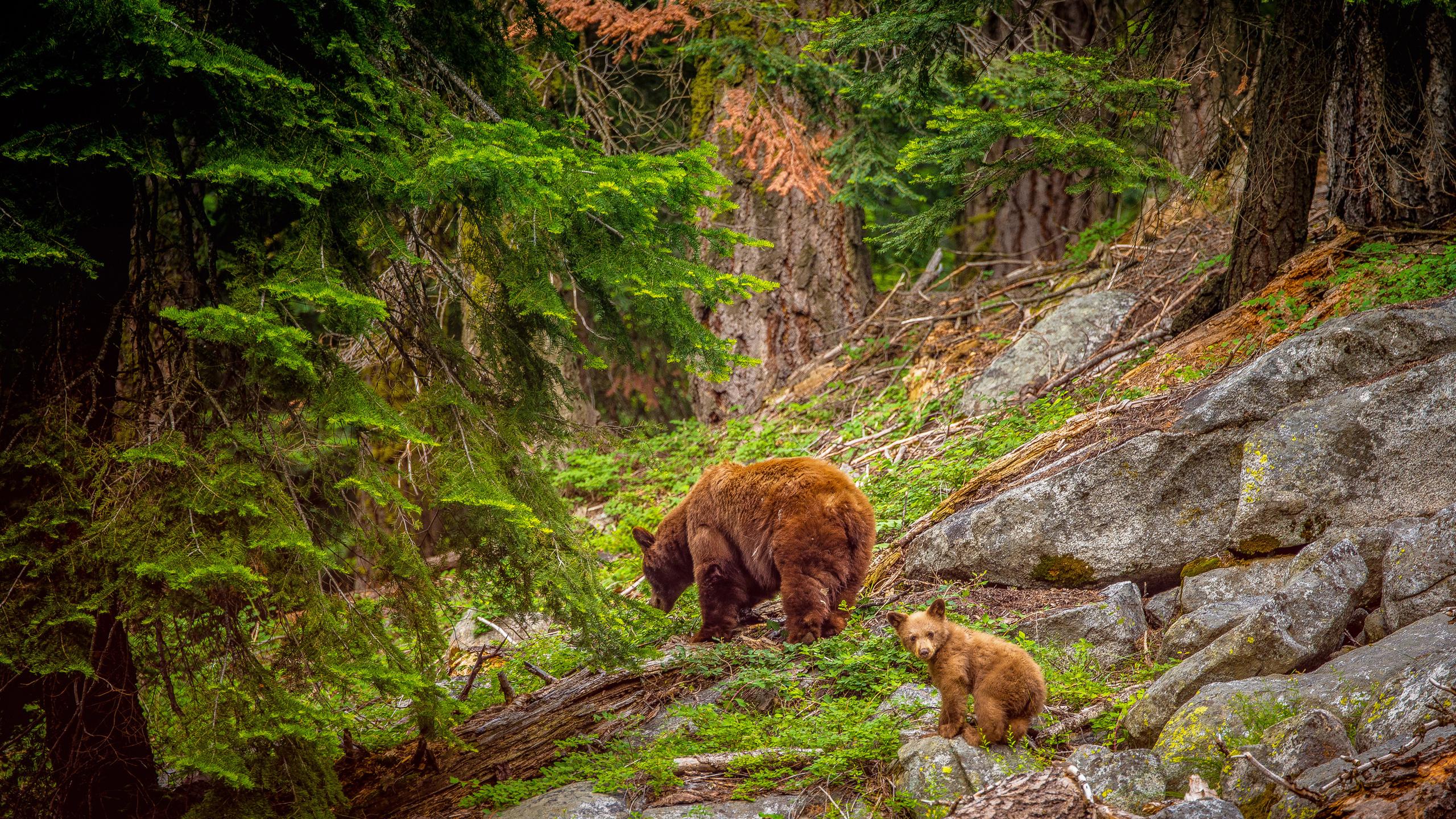 архитектуре руки, картинки на телефон медведи в лесу ласковидный