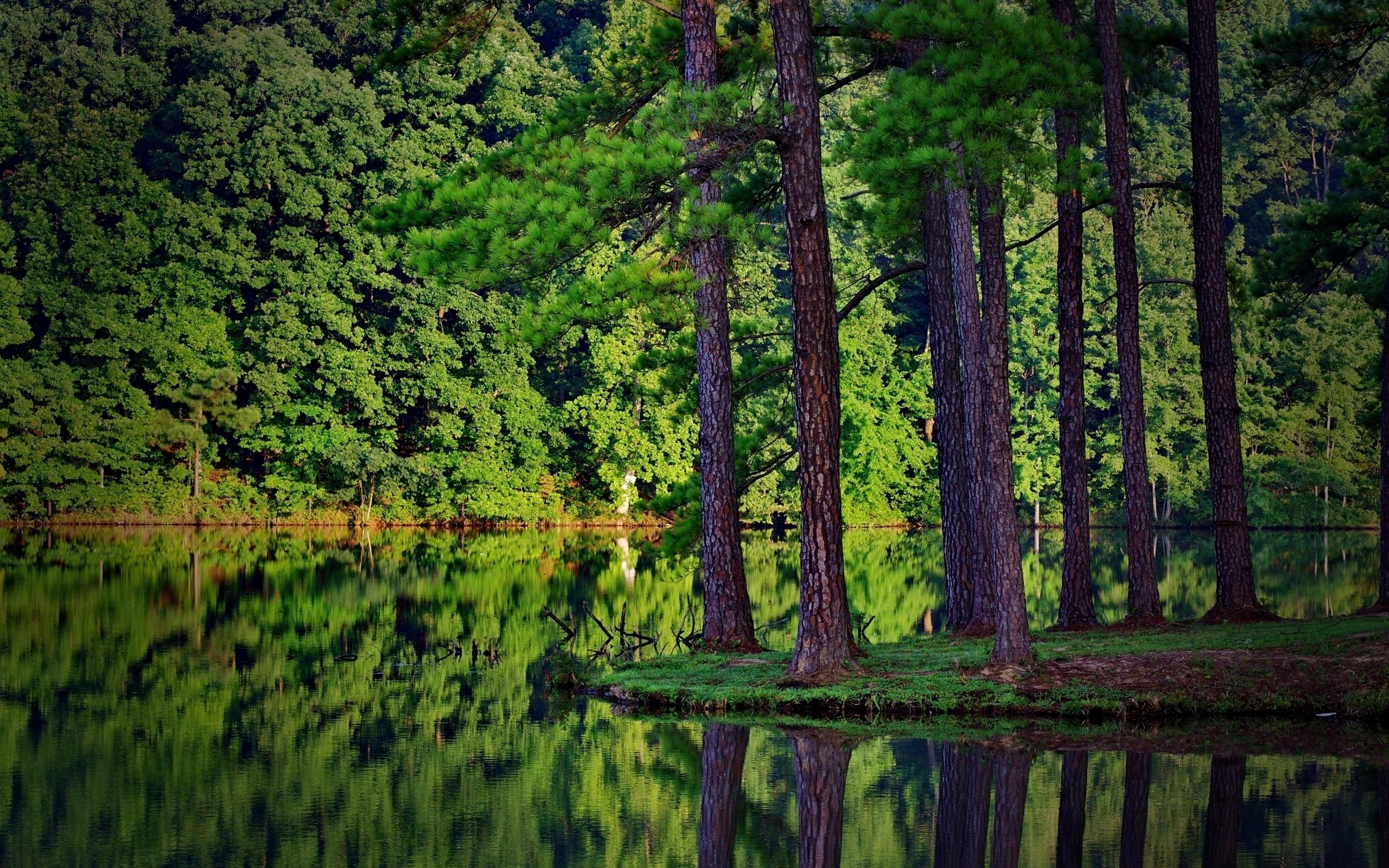 предпочитаю красивые картинки лес высокого качества пижама это