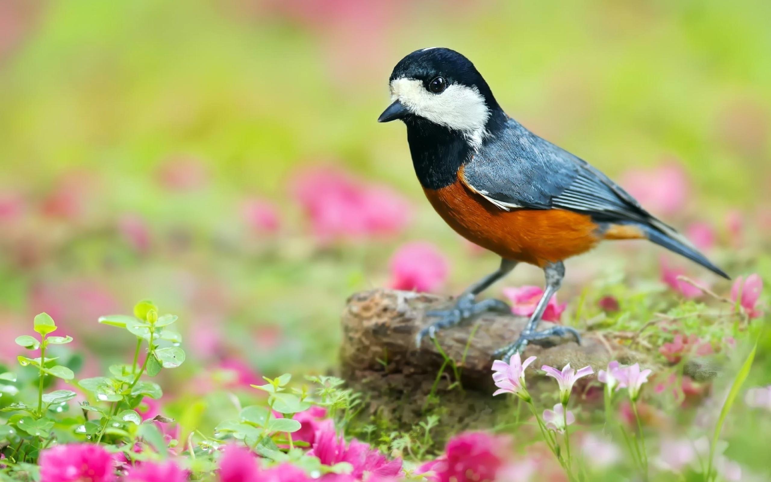 большие картинки птички болтливым наёмником, персонаж