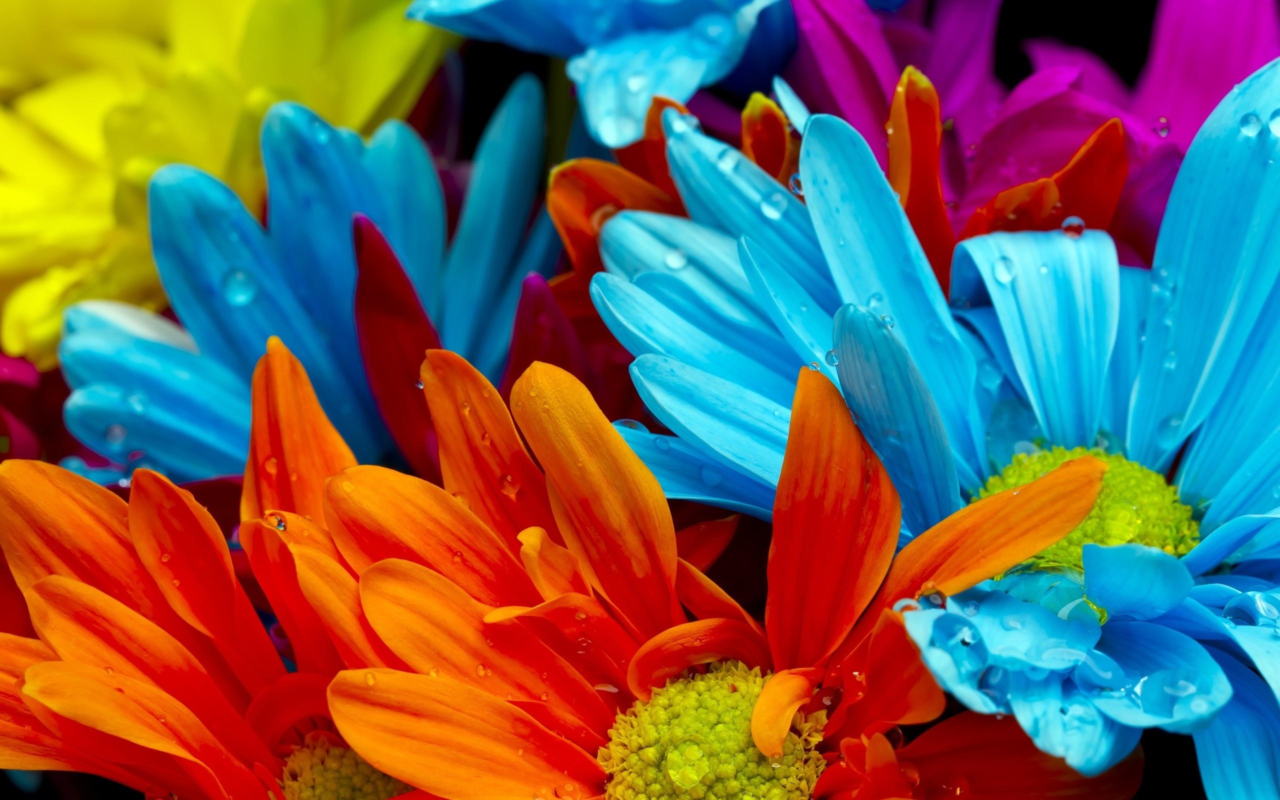 Картинки цветы сочные