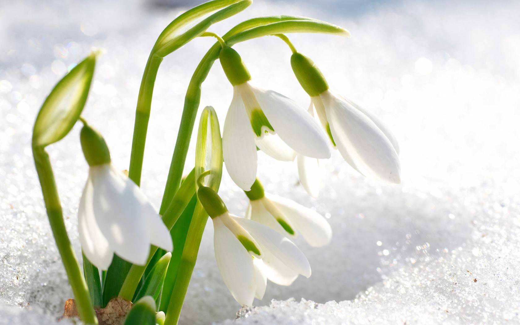 Открытку смс, картинки прекрасной весны