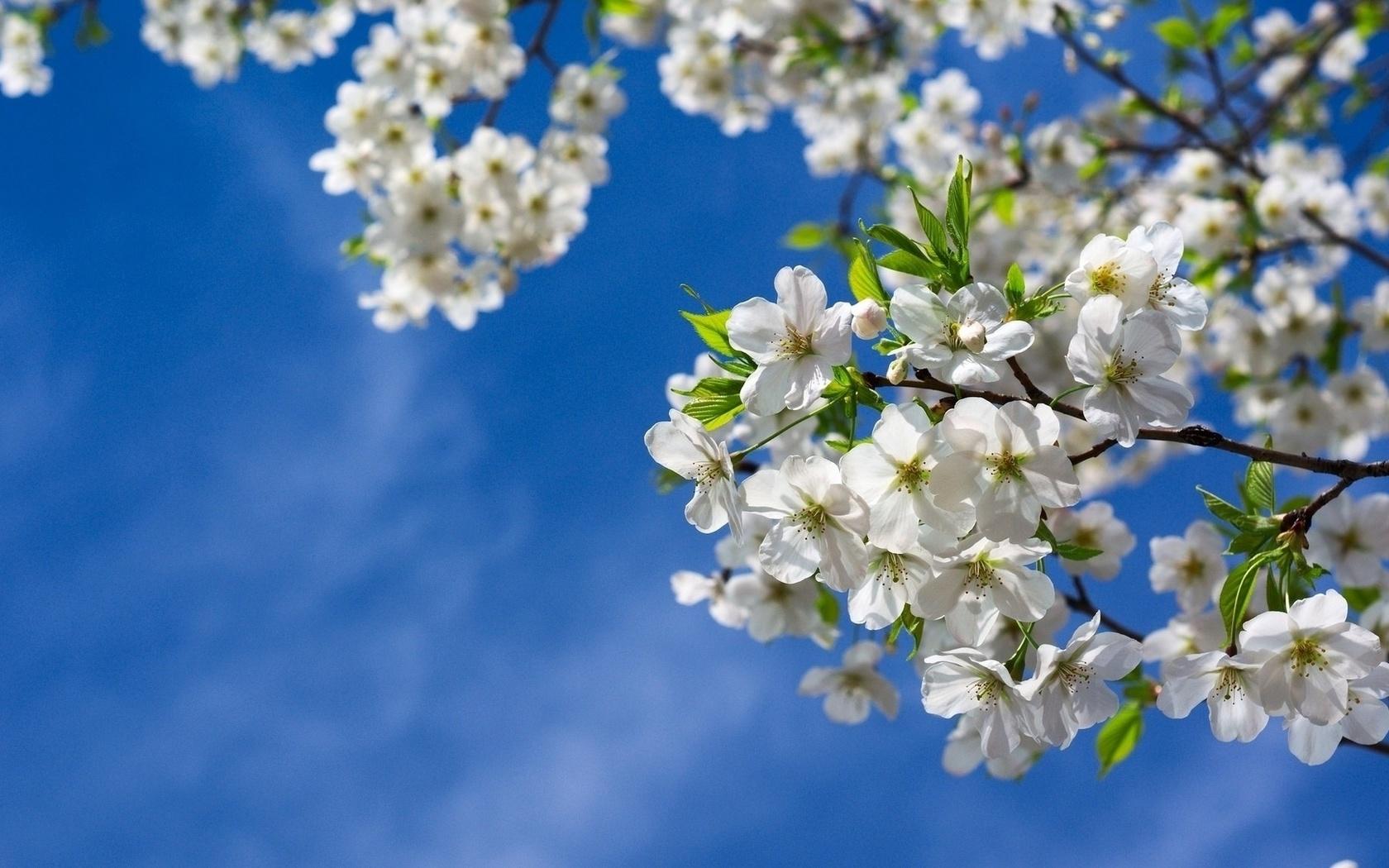 довольно большие картинки весна на весь экран маликов пишет