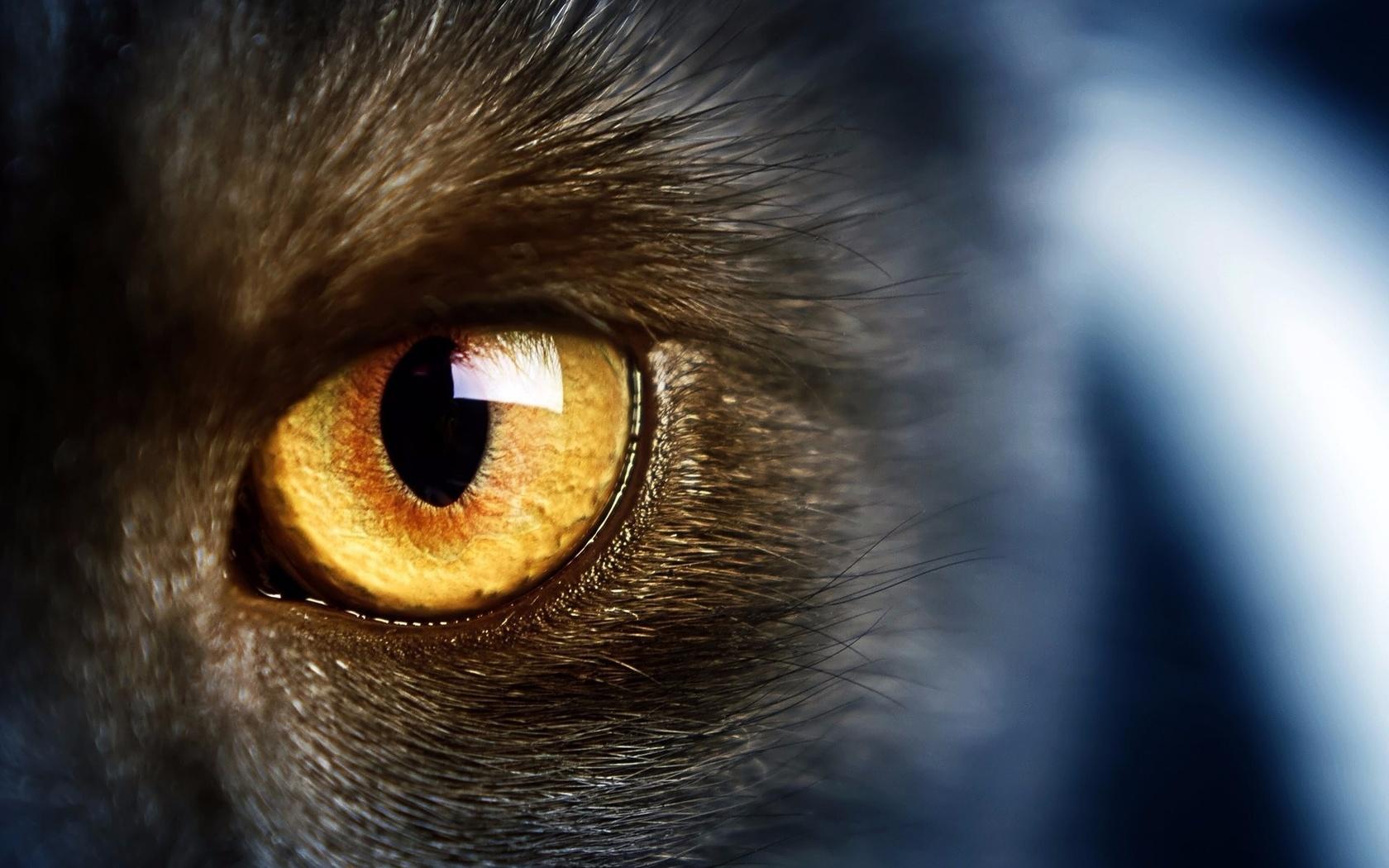 живая картинка глаз кошки нас надежная охрана