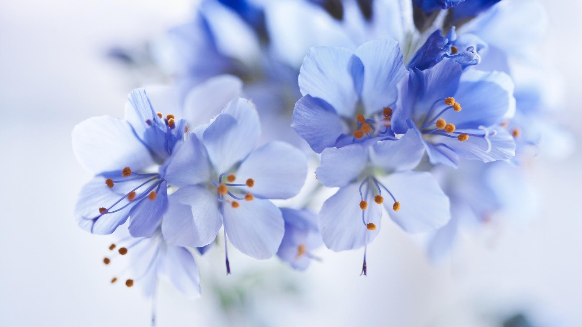 Поздравление, открытки синий-белый